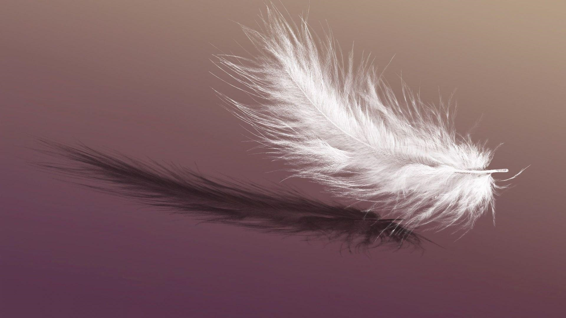 Feathers Pic