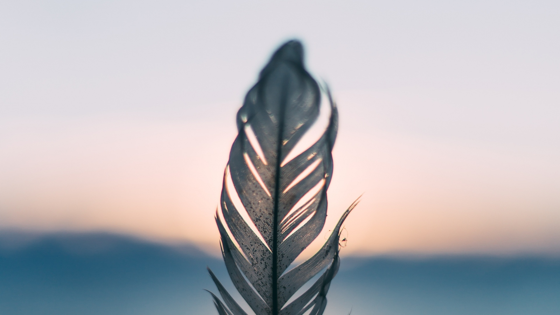 Feathers Wallpaper theme