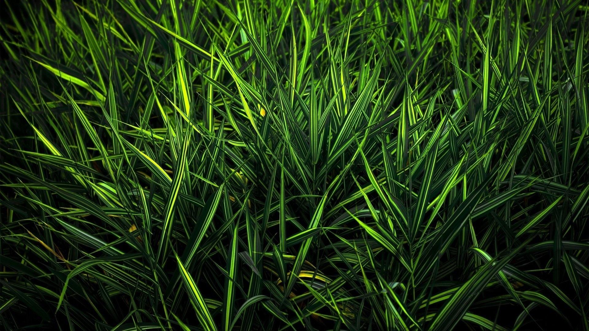 Green Grass wallpaper for desktop
