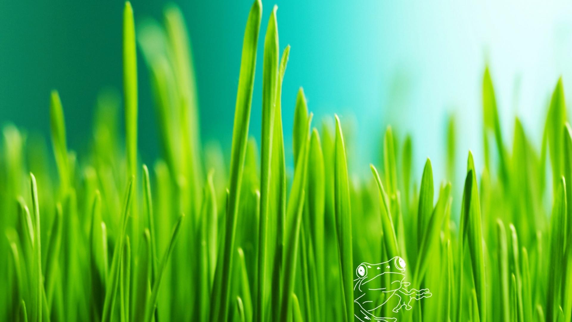 Green Grass computer wallpaper