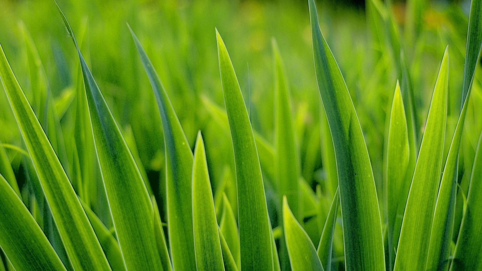 Green Grass Wallpaper theme