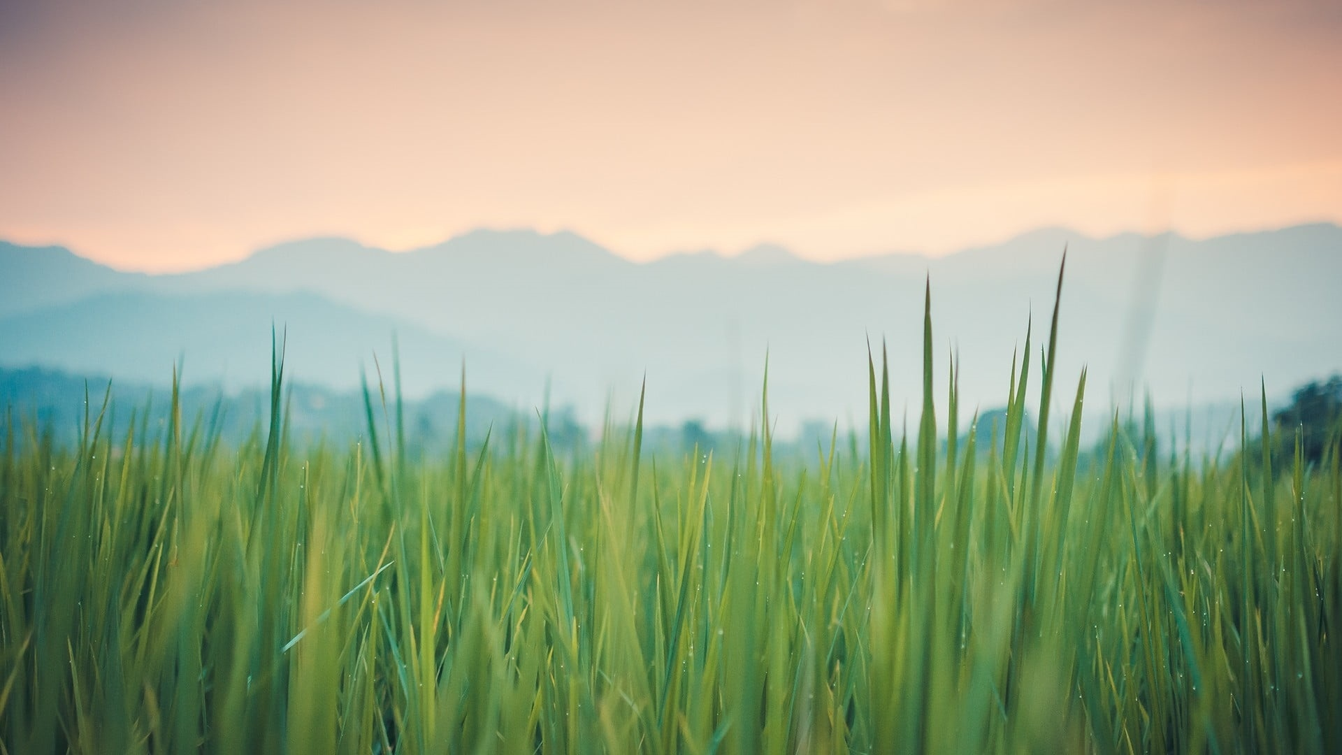 Green Grass Picture