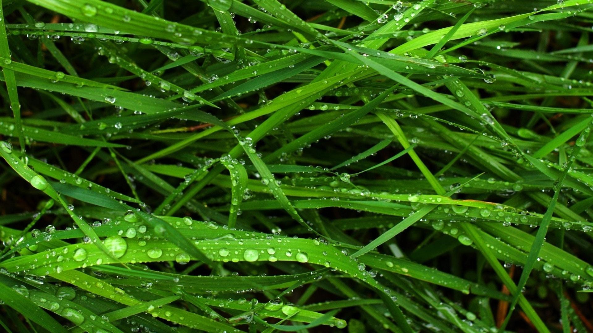 Green Grass wallpaper for pc