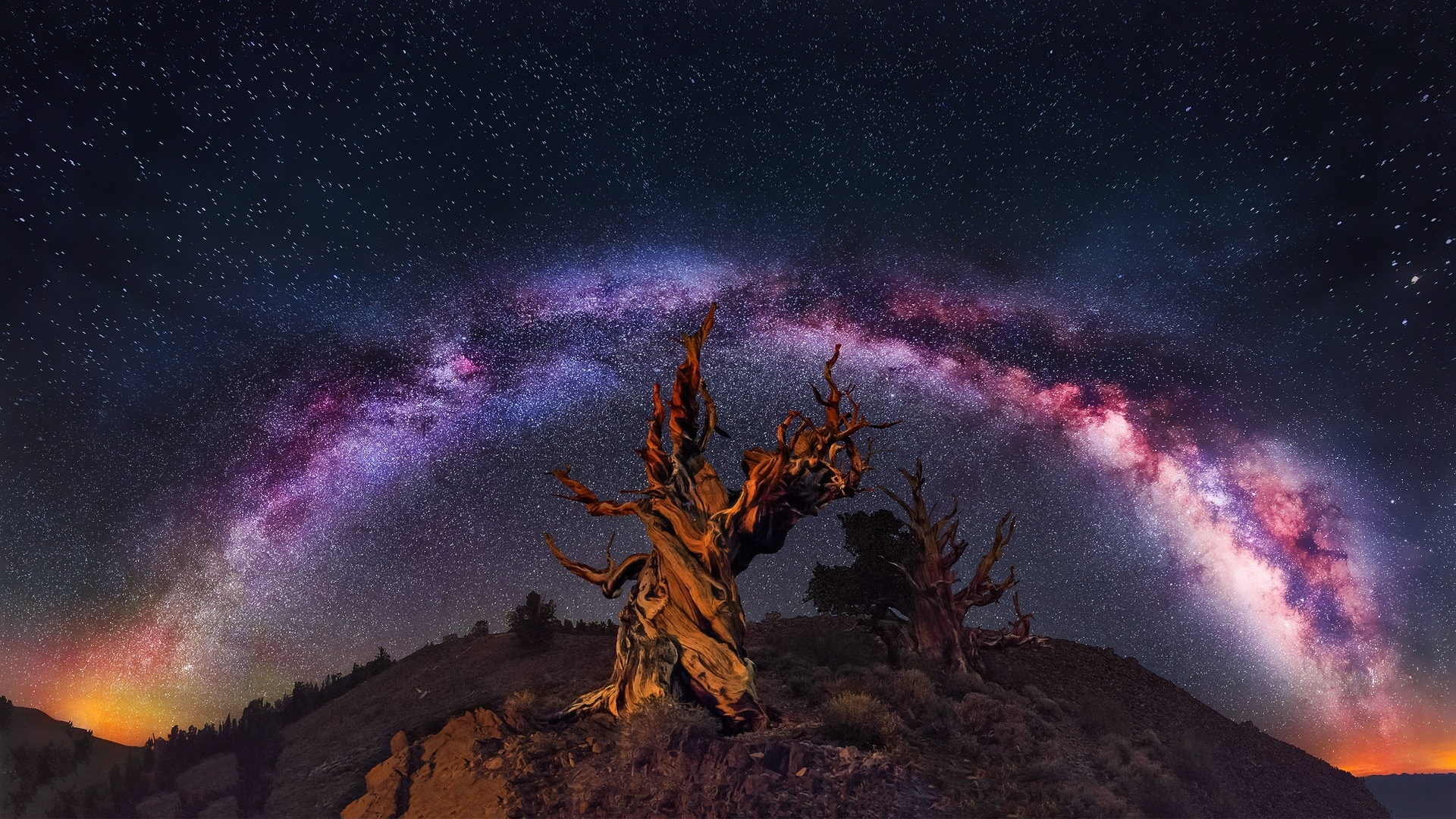 Tree And Space wallpaper for pc