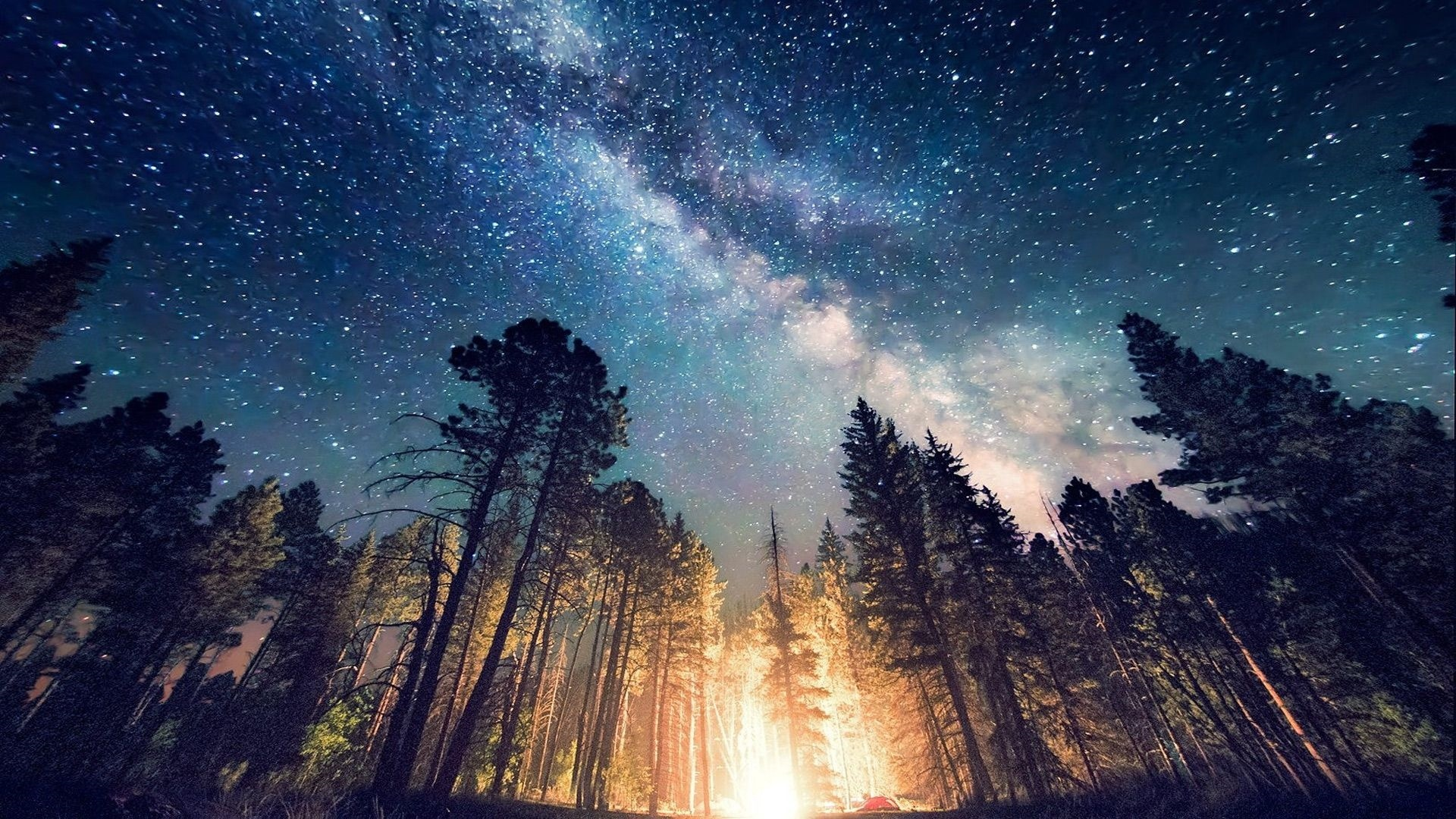 Tree And Space Wallpaper