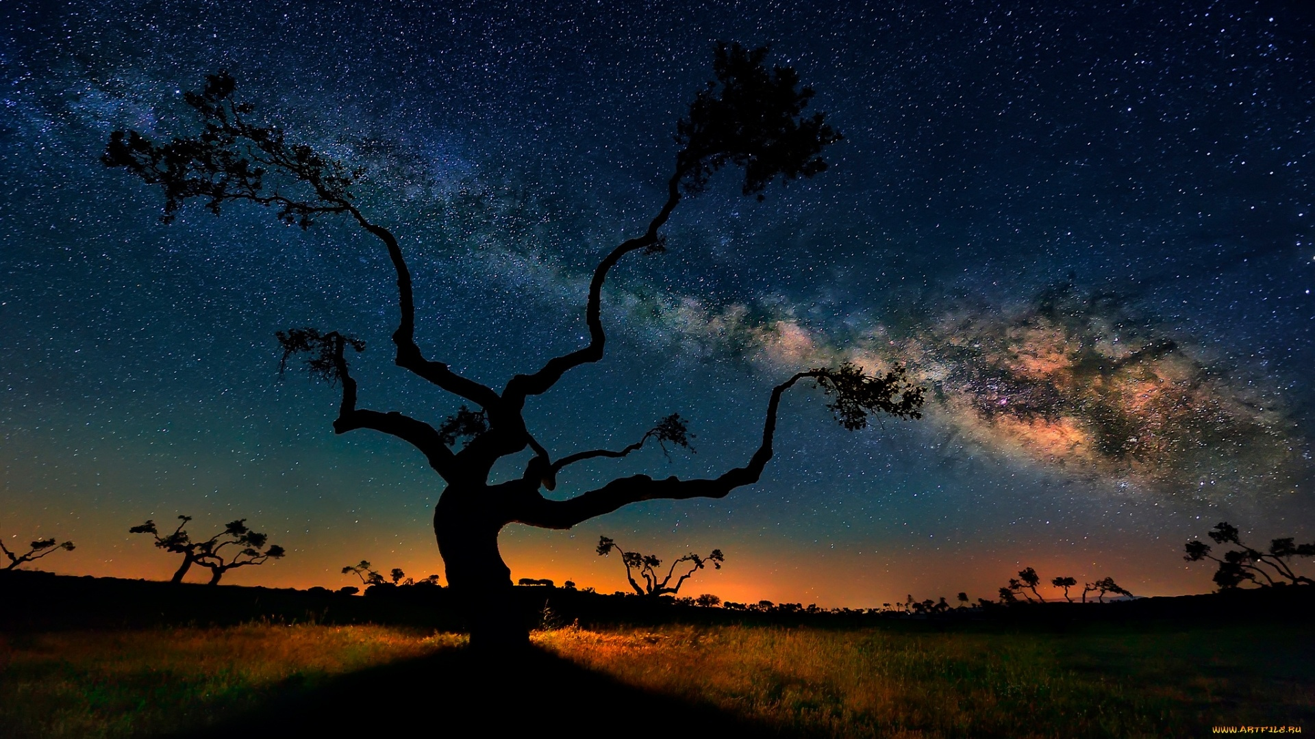 Tree And Space wallpaper for computer