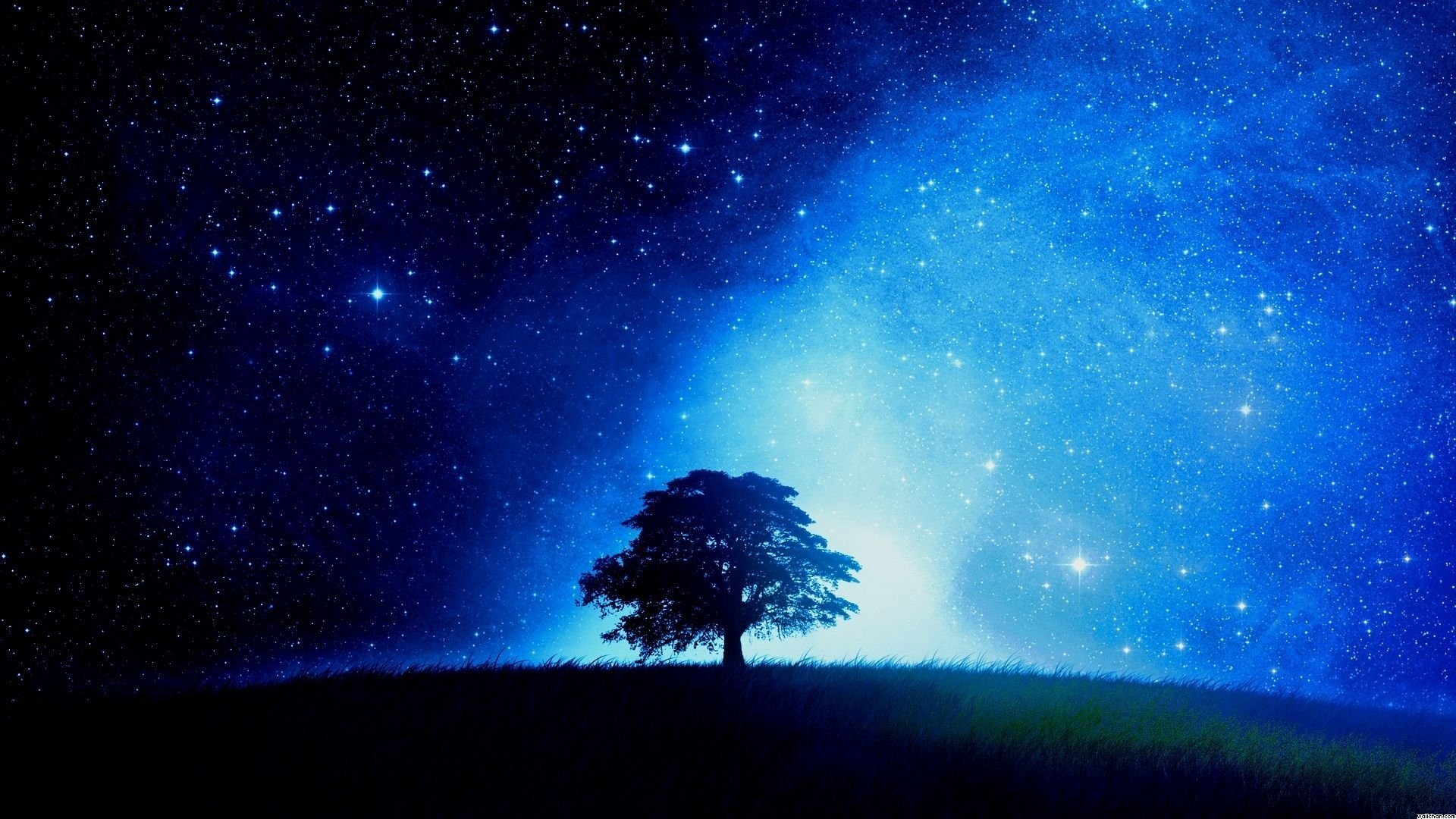 Tree And Space HD Wallpaper
