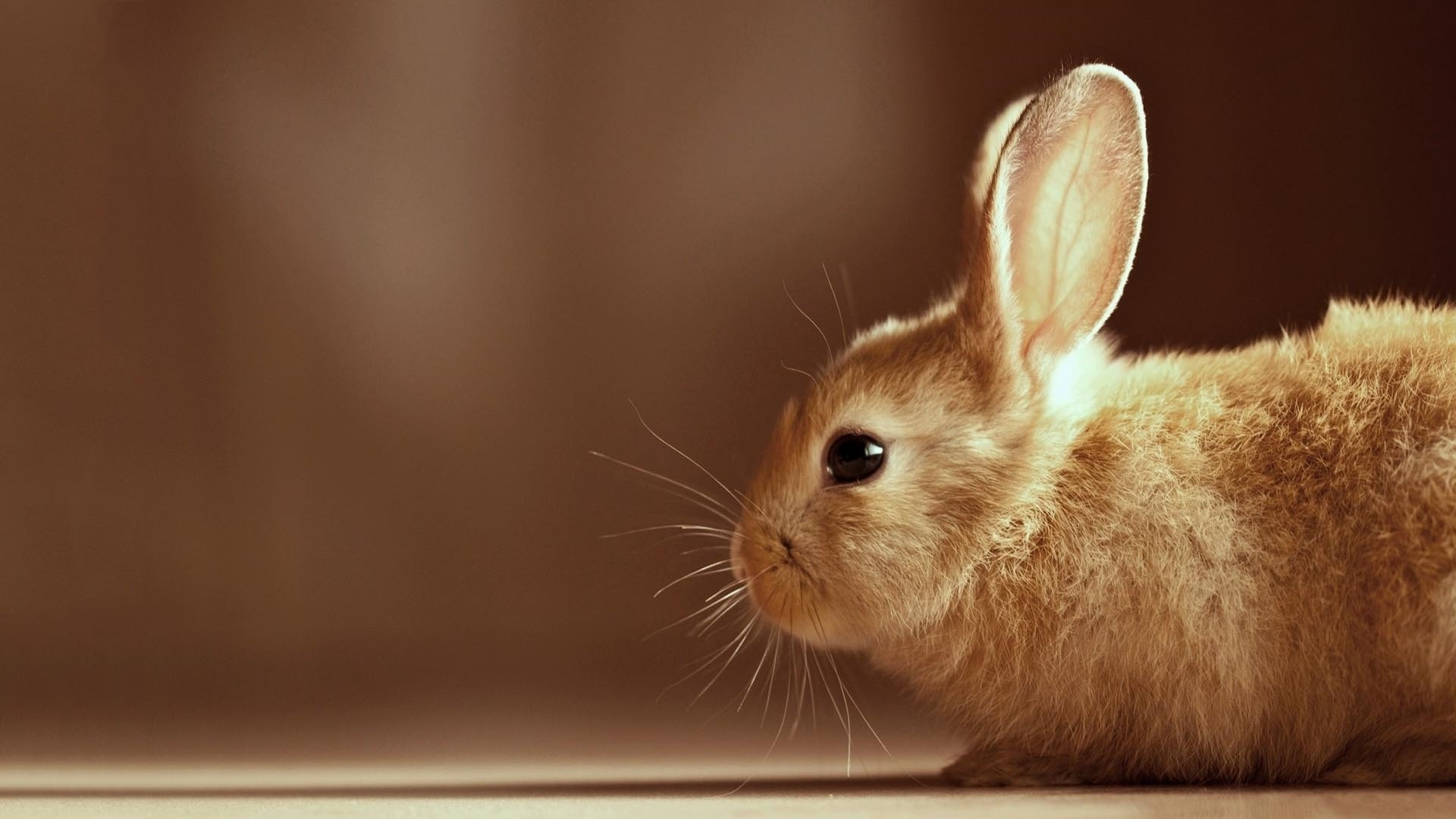Cute Rabbit computer wallpaper