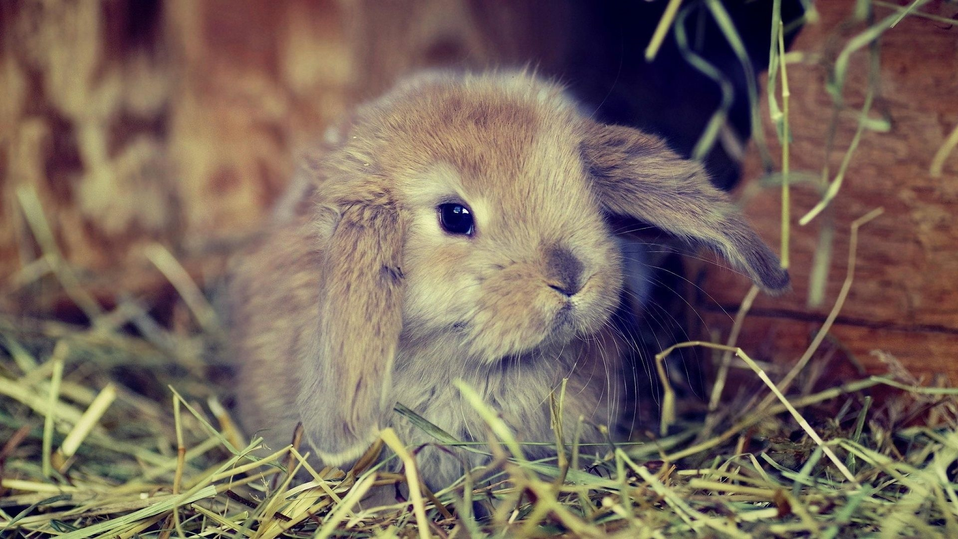 Cute Rabbit Picture