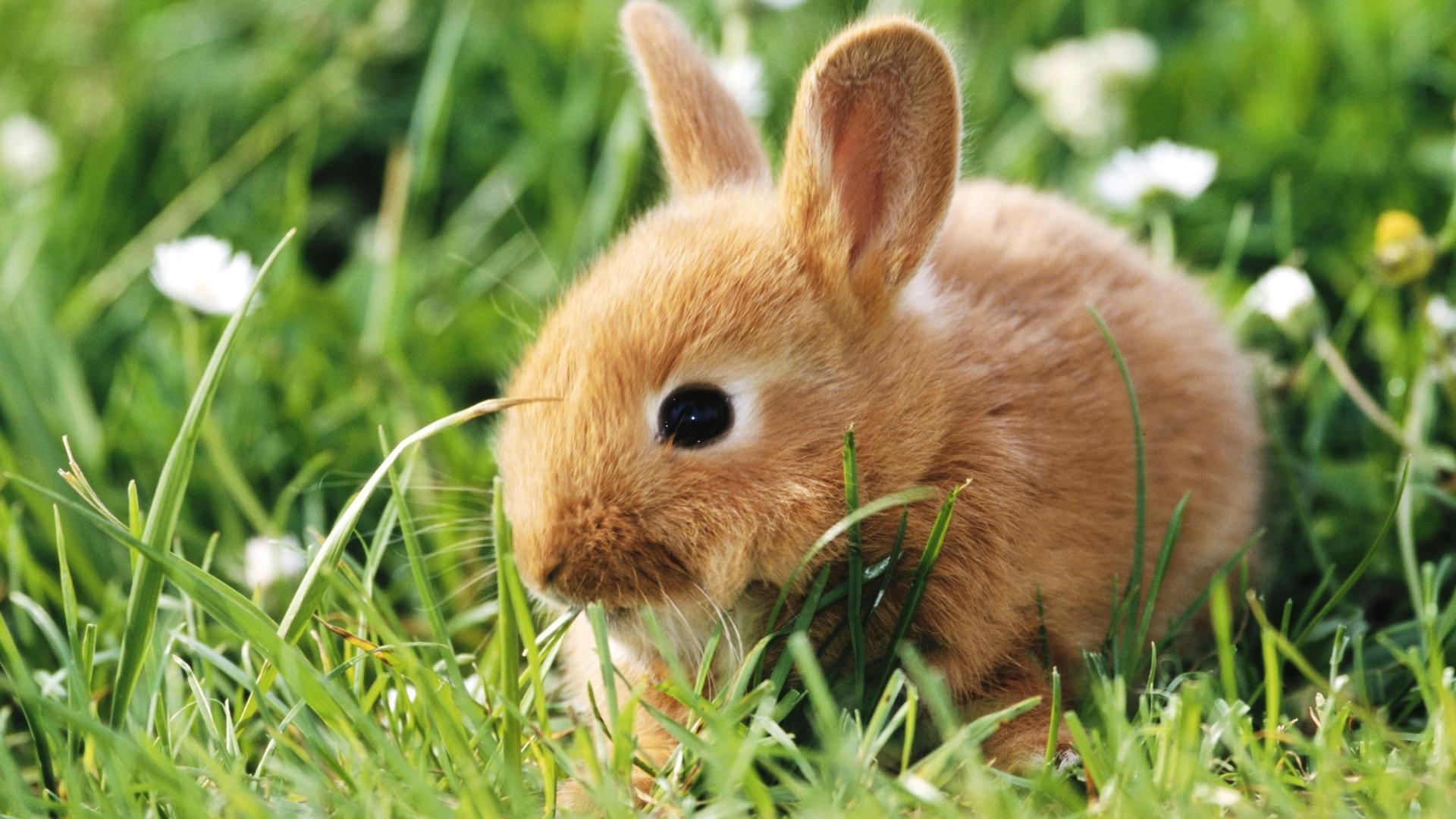 Cute Rabbit wallpaper photo hd