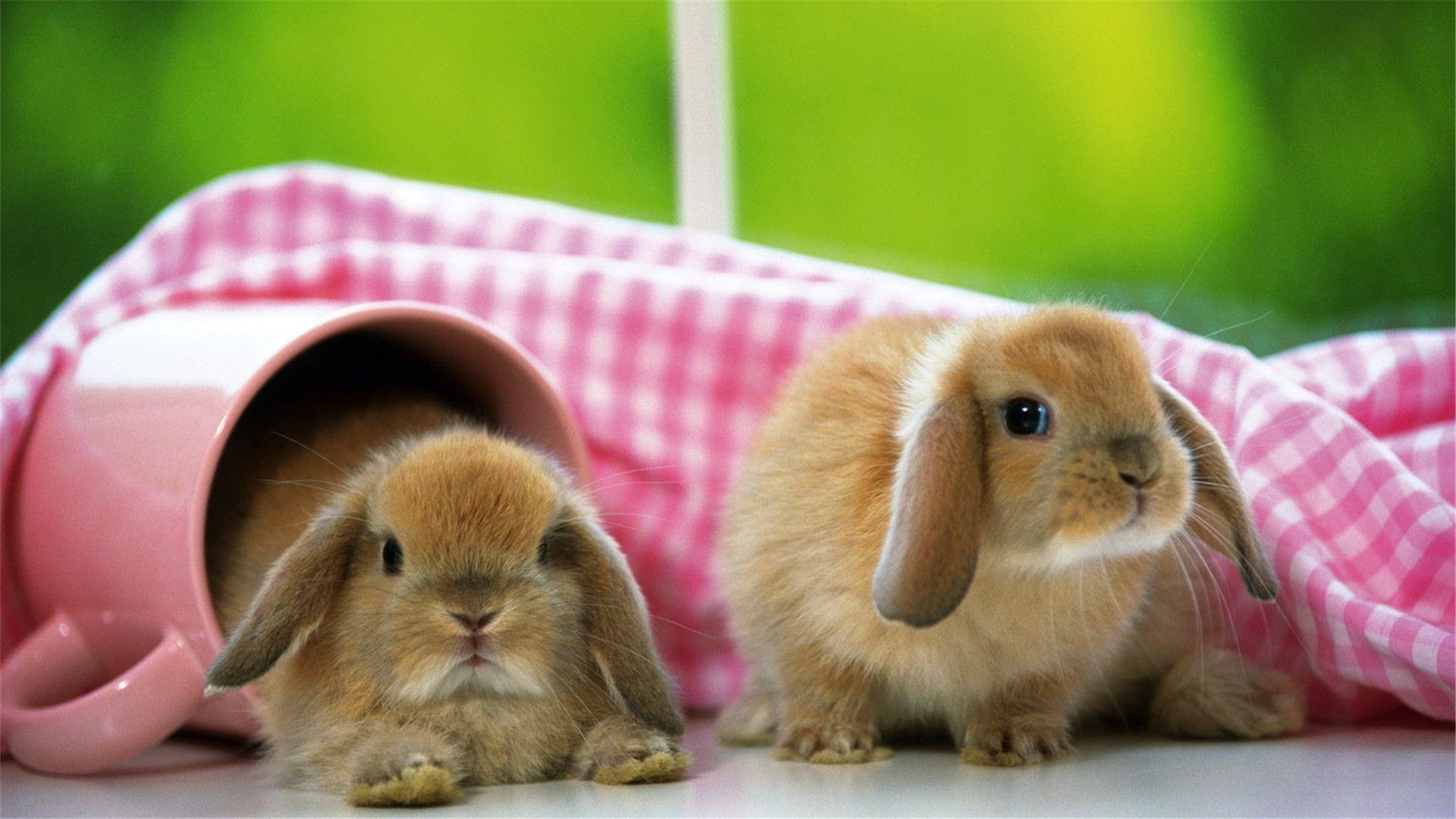 Cute Rabbit wallpaper for computer