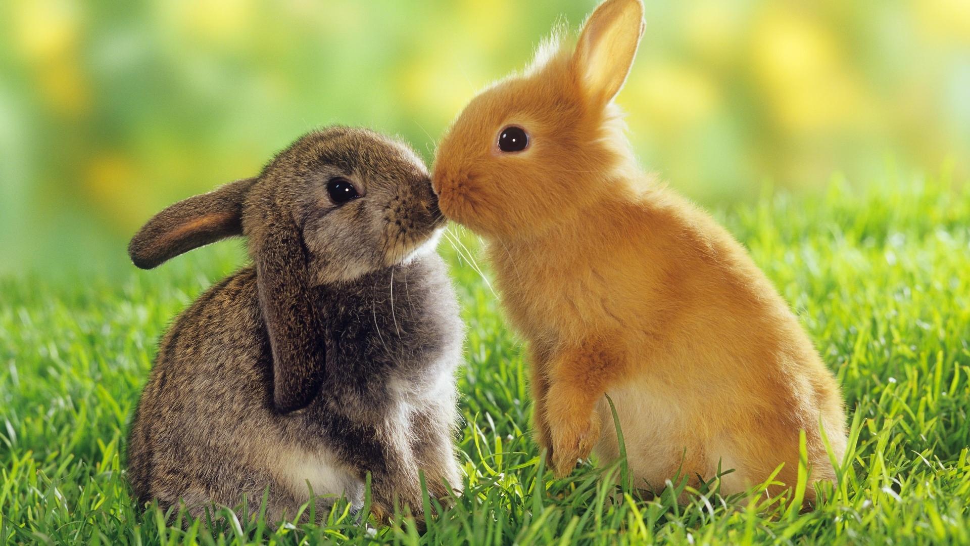 Cute Rabbit Wallpaper theme