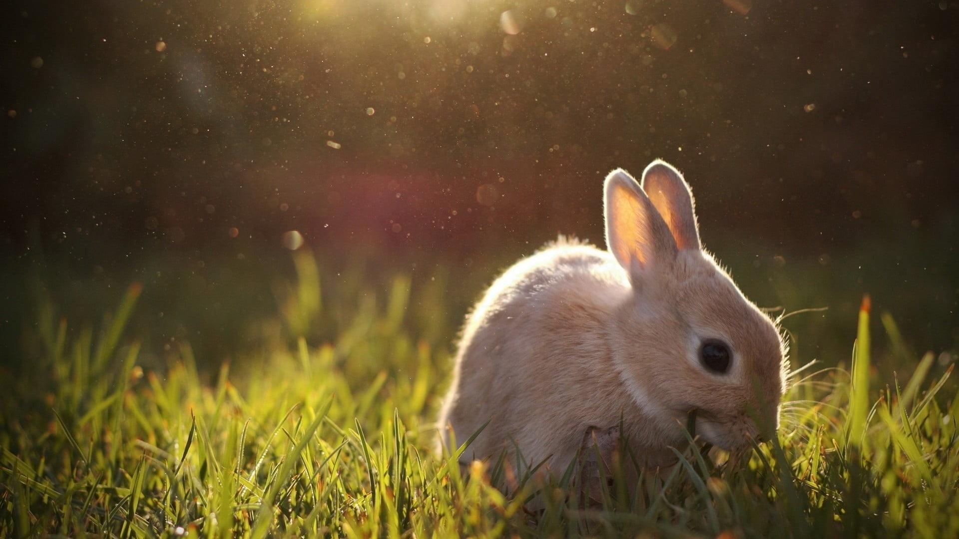 Cute Rabbit wallpaper for pc