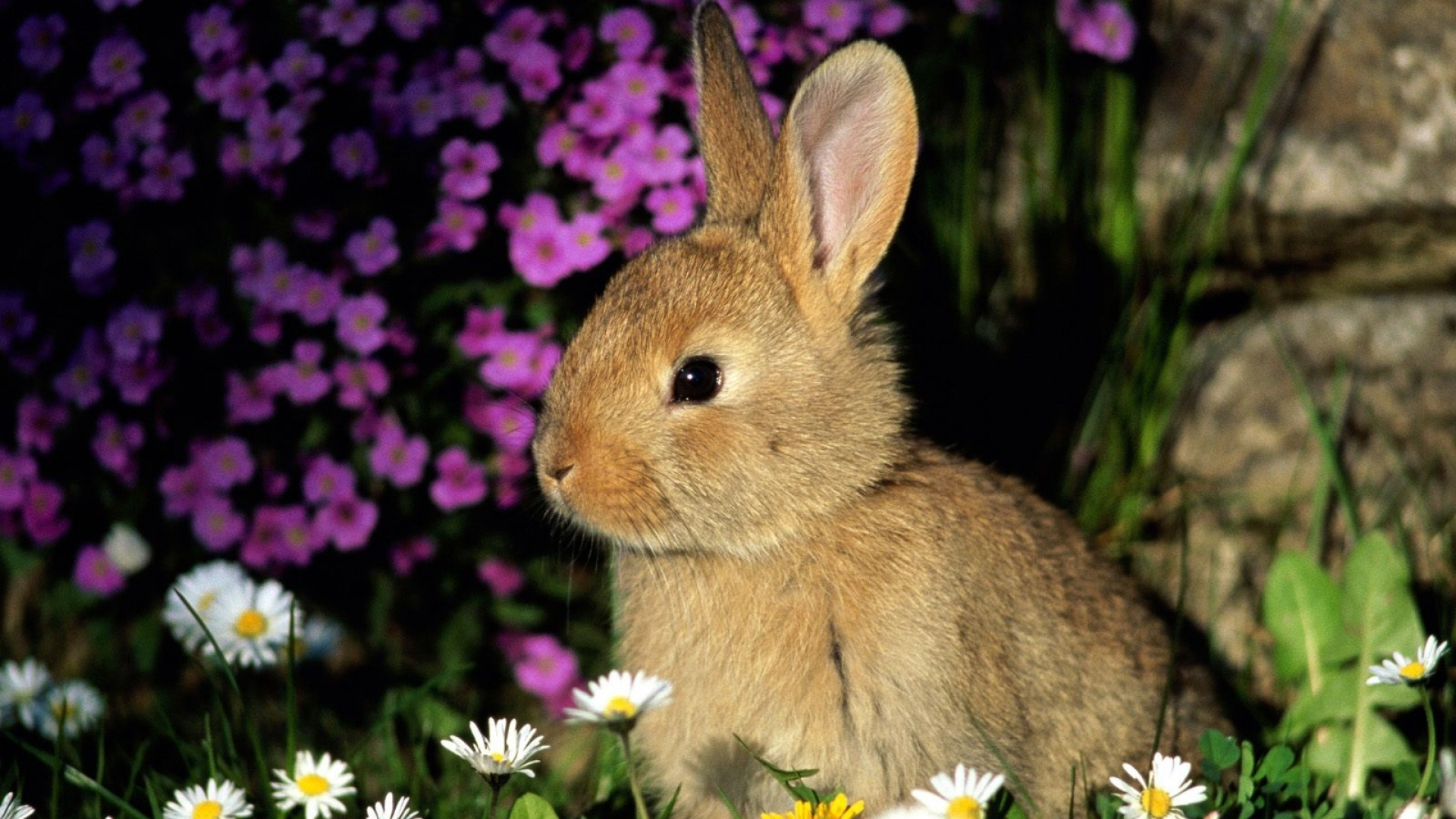 Cute Rabbit desktop wallpaper hd