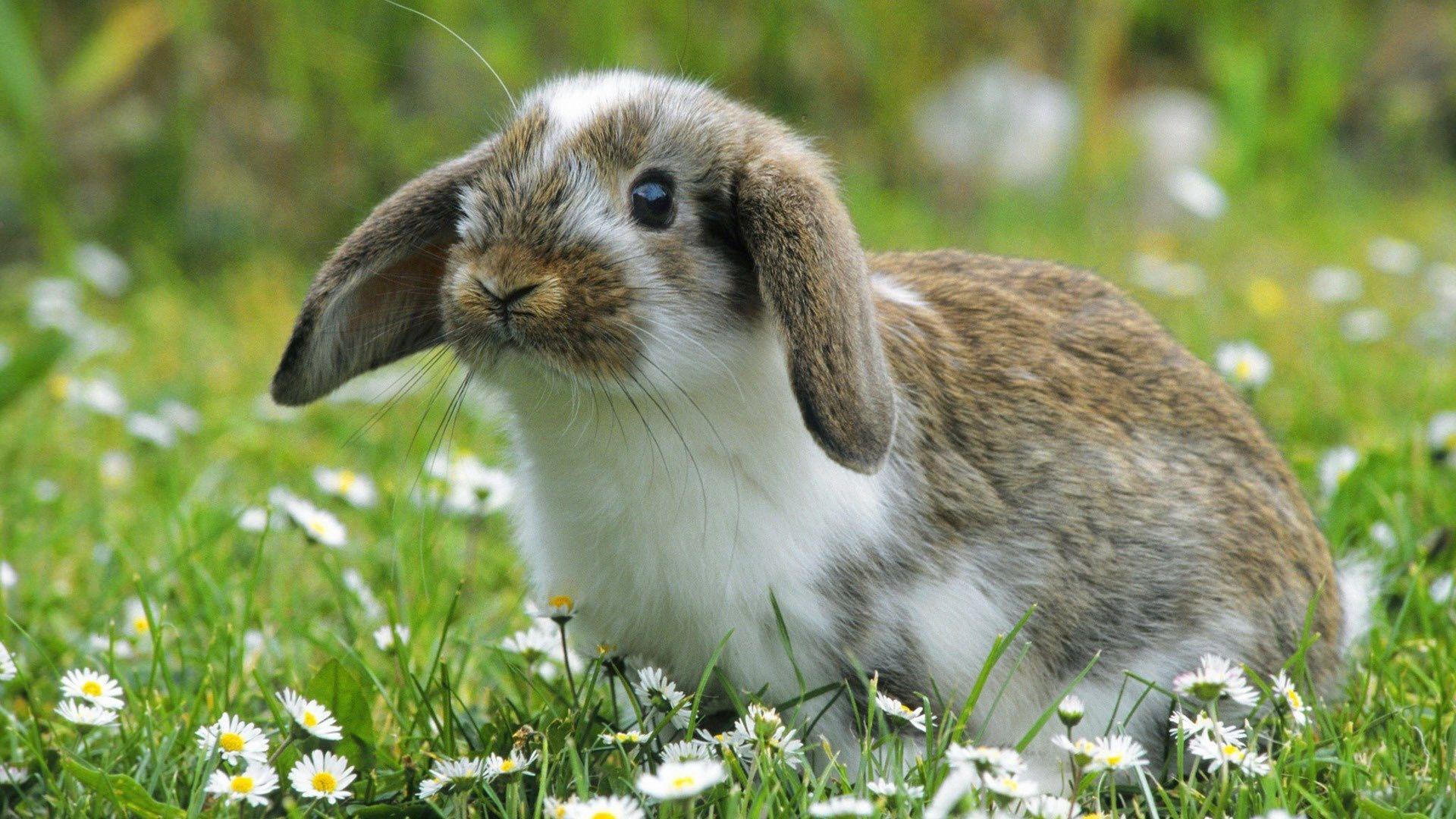 Cute Rabbit Background