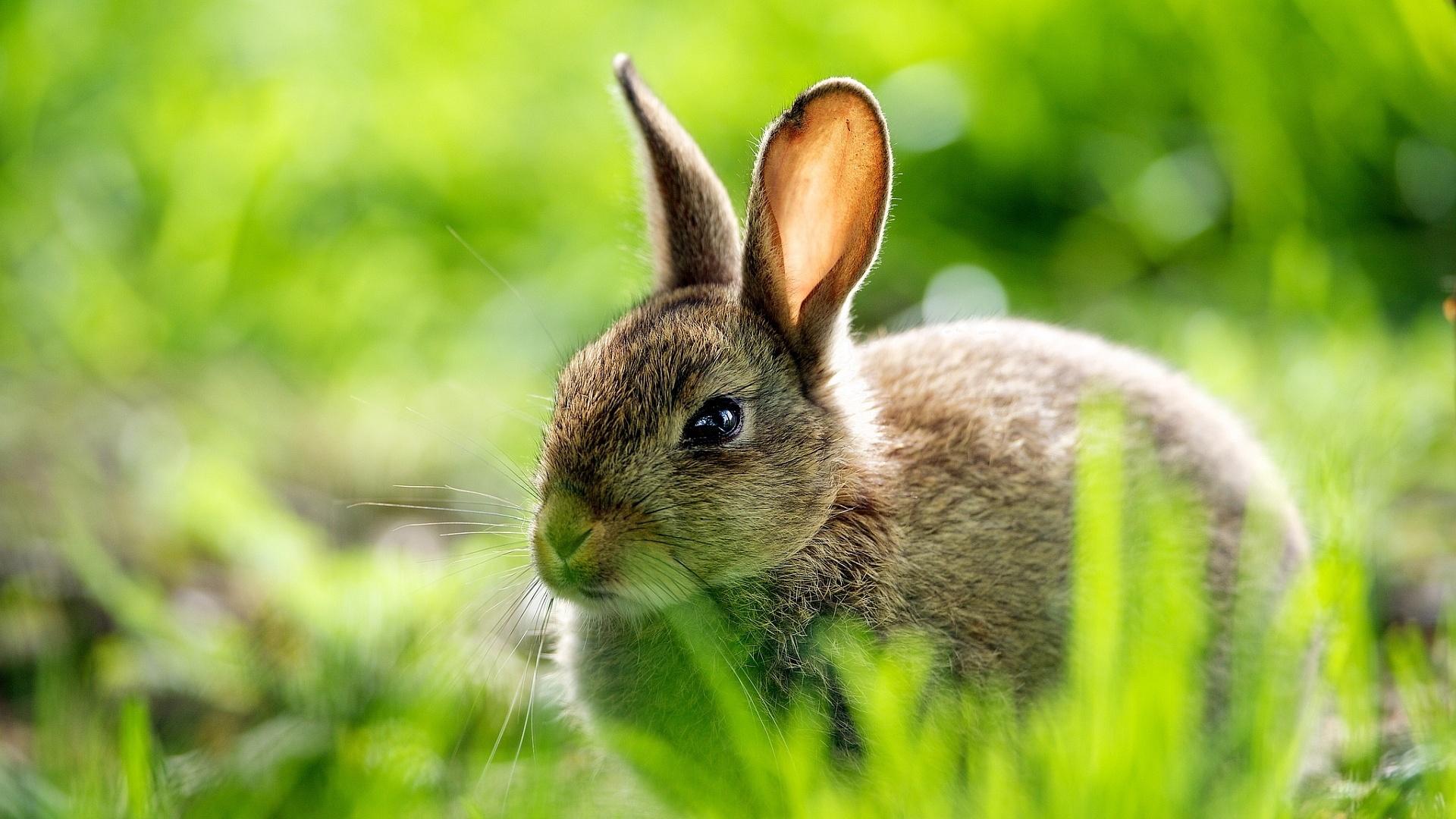 Cute Rabbit Pic