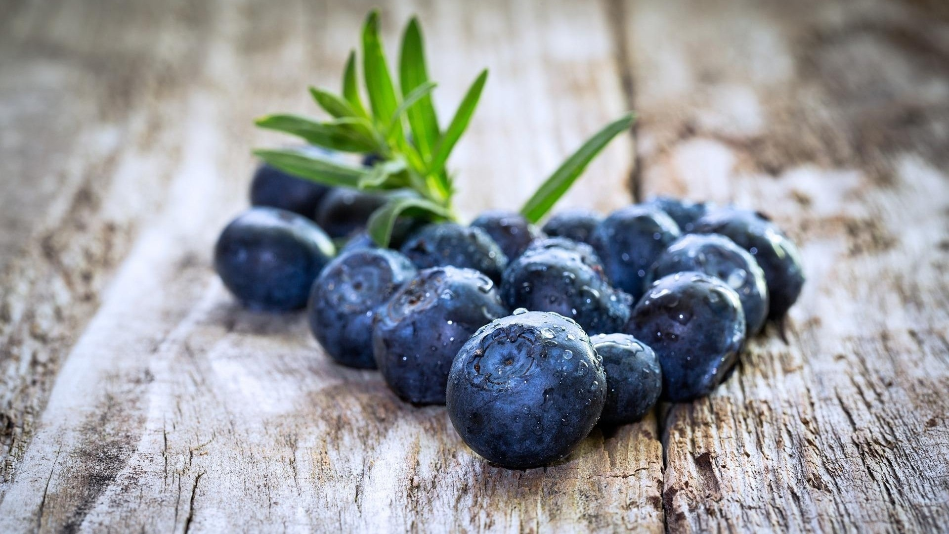 Blueberries Picture