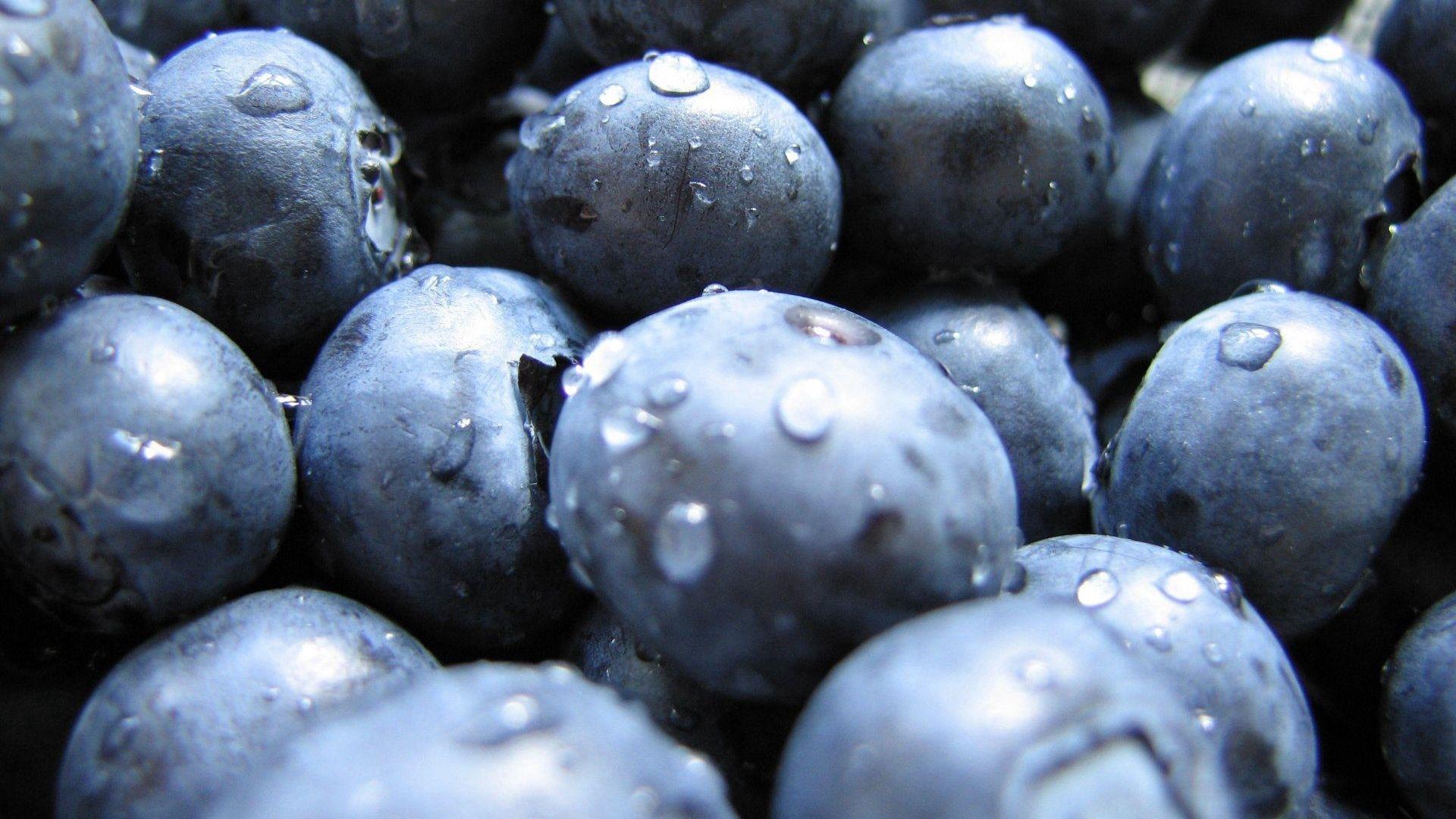 Blueberries wallpaper photo hd