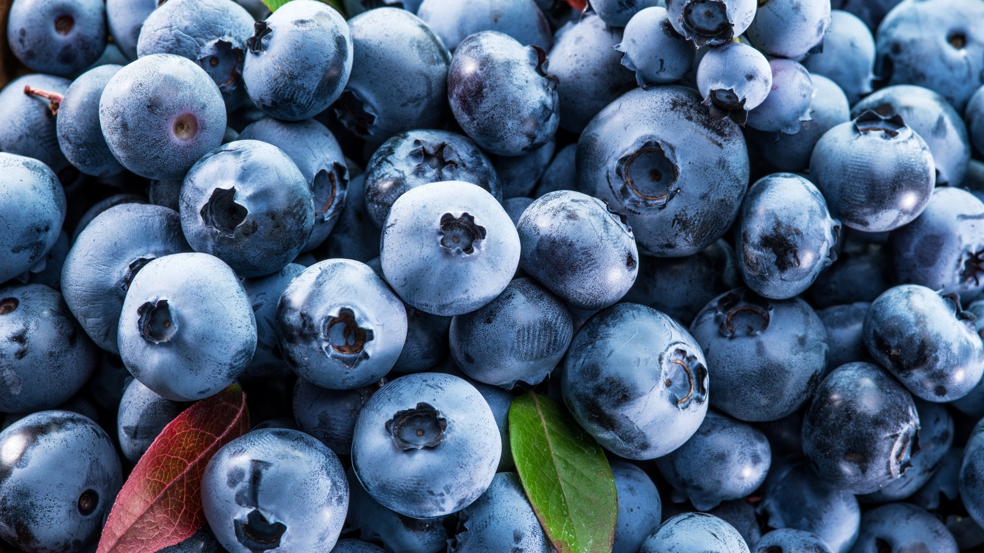 Blueberries wallpaper for pc