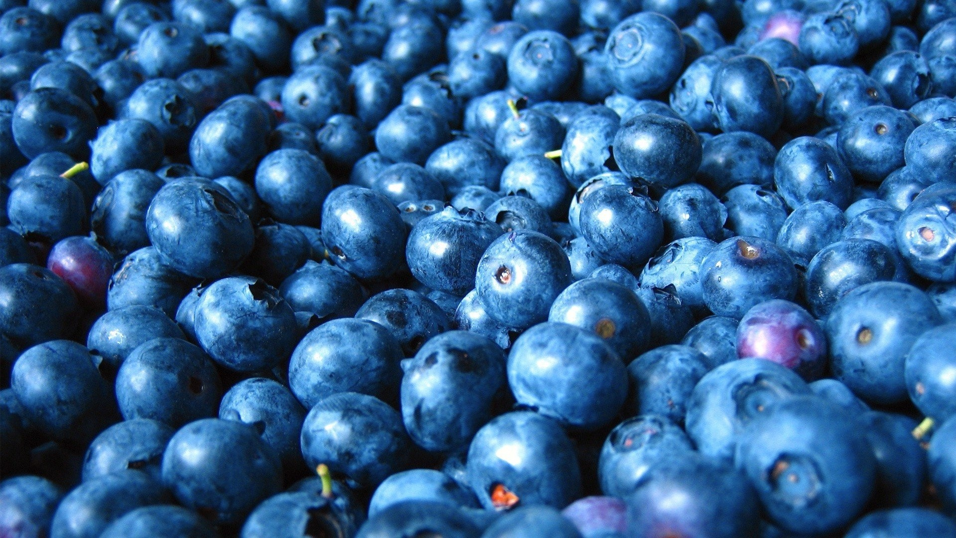 Blueberries HD Wallpaper