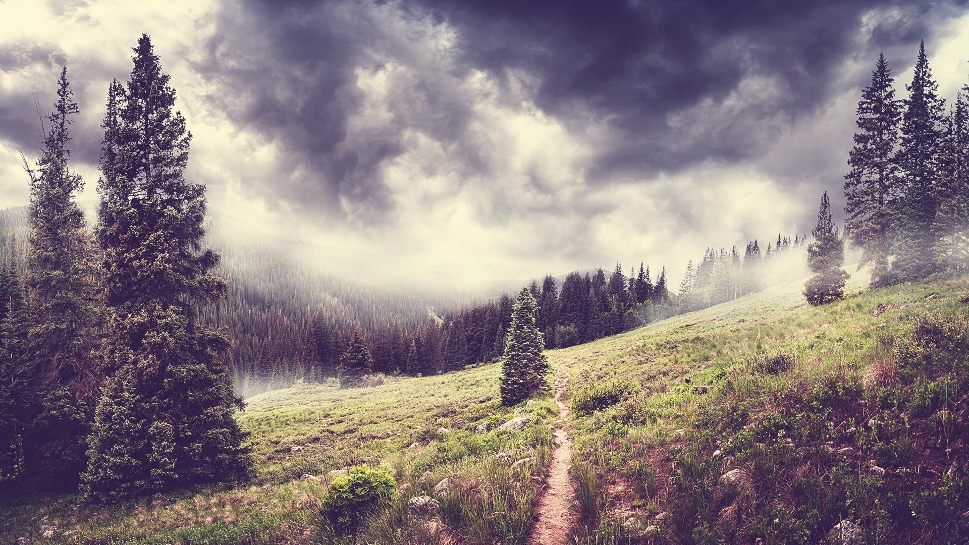 Mountains And Forest In Fog Pic