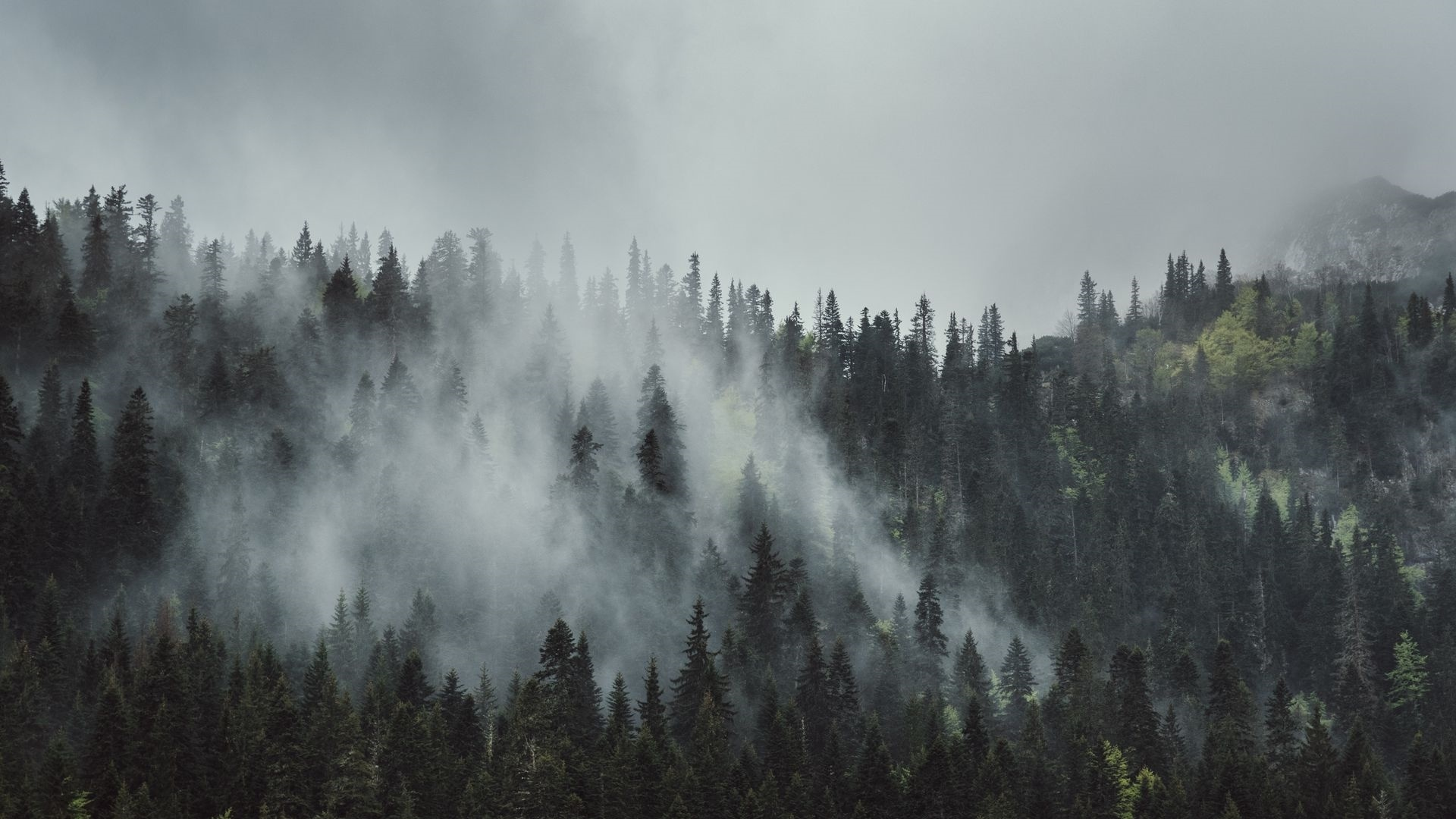 Mountains And Forest In Fog Wallpaper