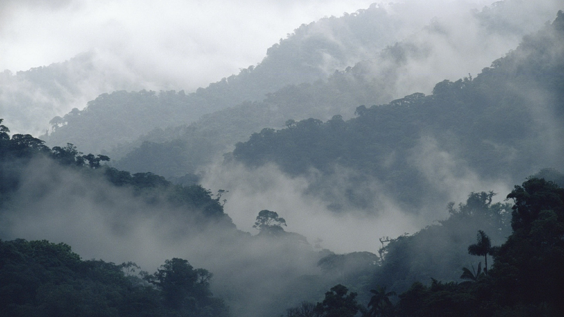 Mountains And Forest In Fog Picture