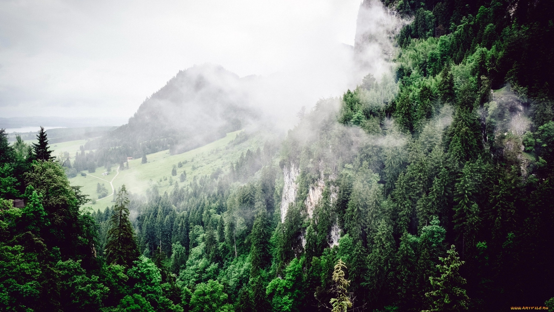 Mountains And Forest In Fog HD Wallpaper