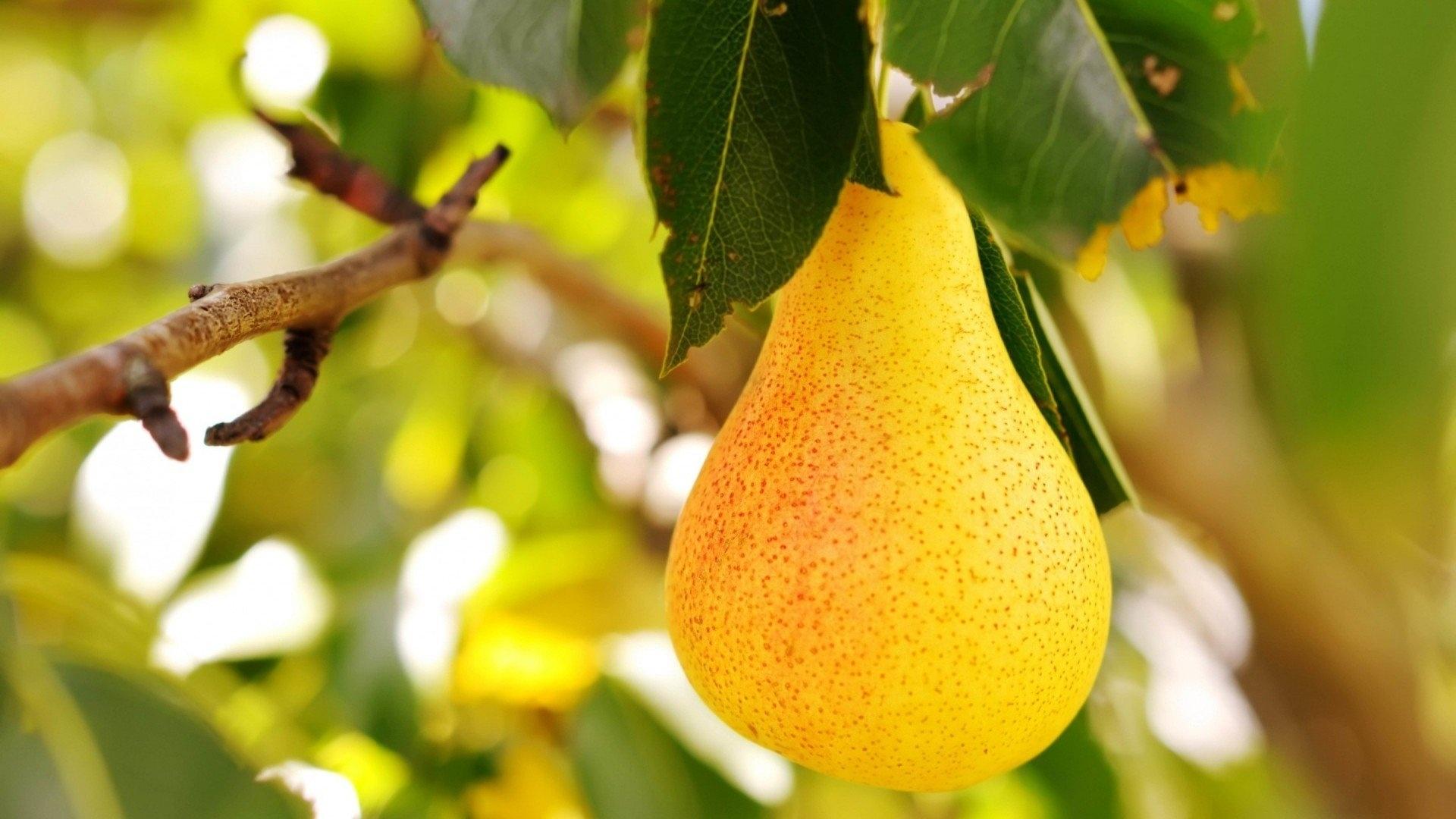 Pear Pic