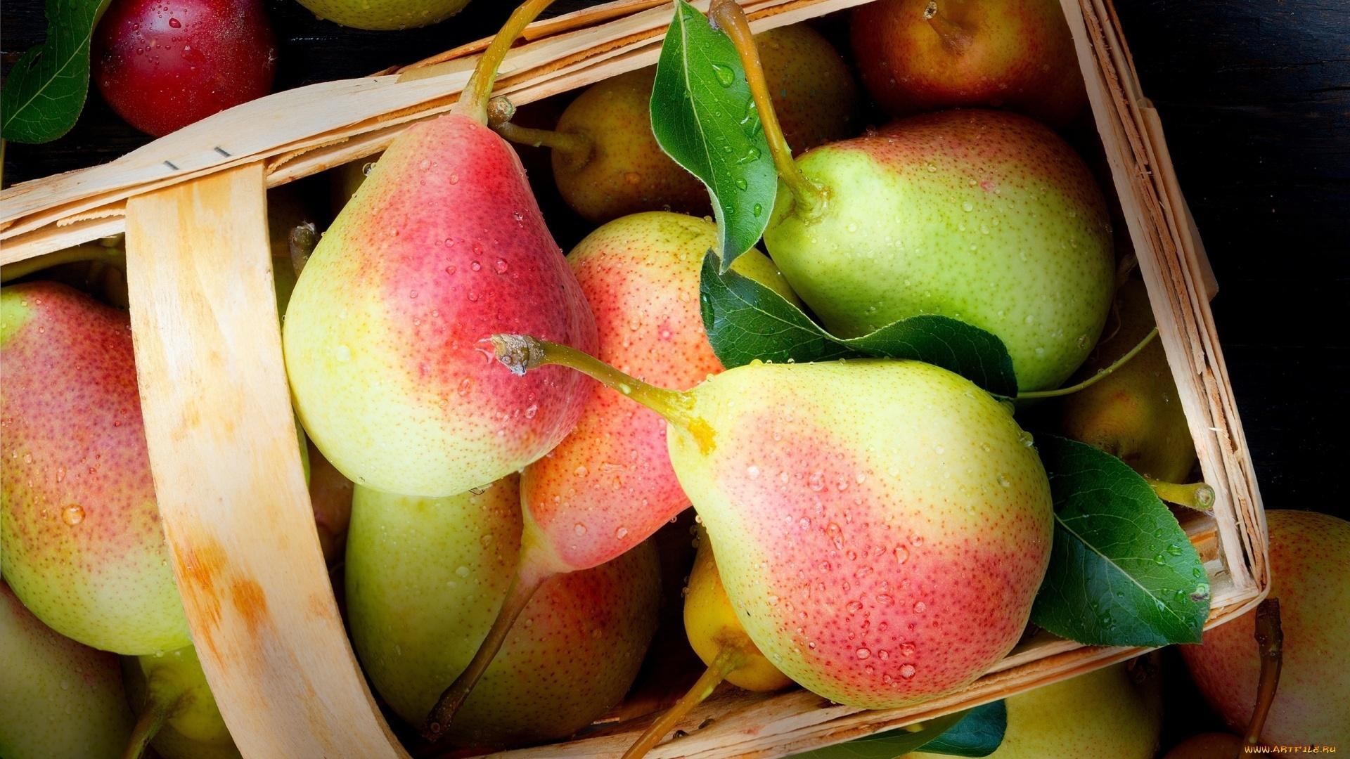 Pear HD Wallpaper