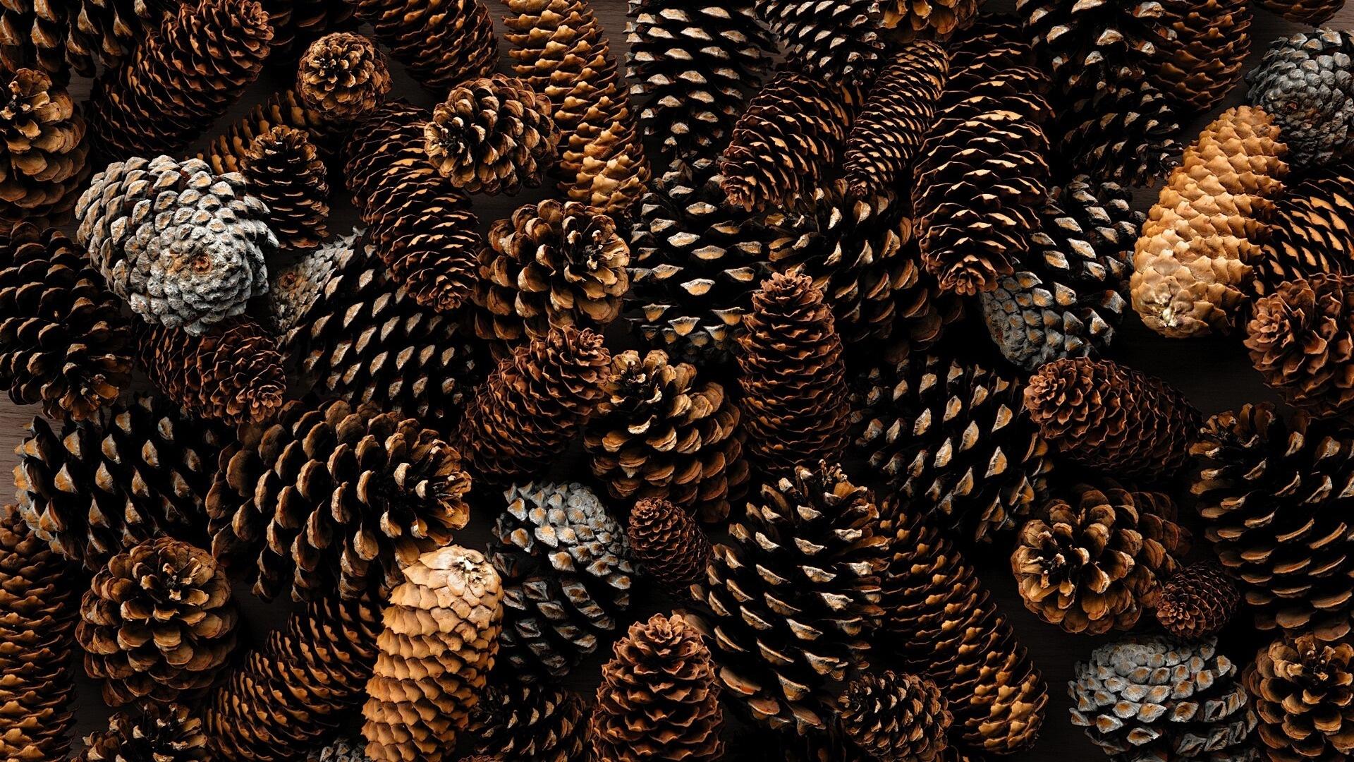 Pine Cone Pic