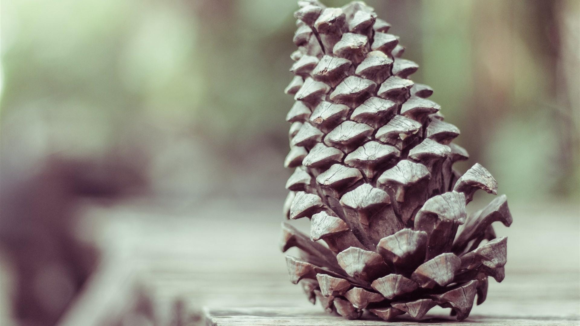Pine Cone Desktop Wallpaper