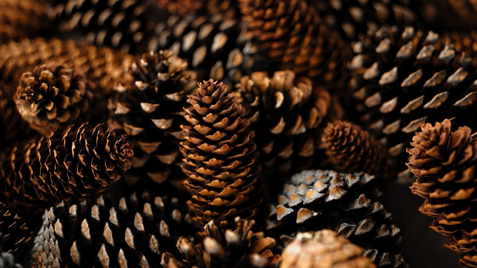 Pine Cone Picture
