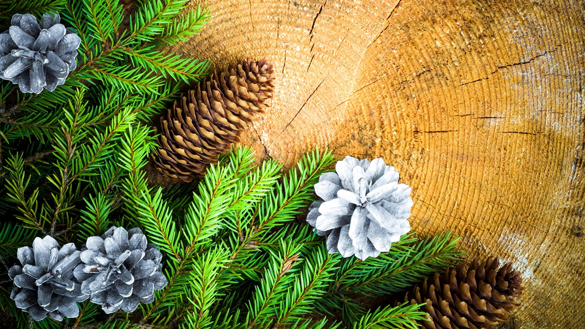 Pine Cone Image
