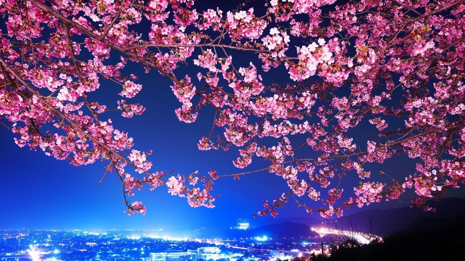 Sakura Blossom Image