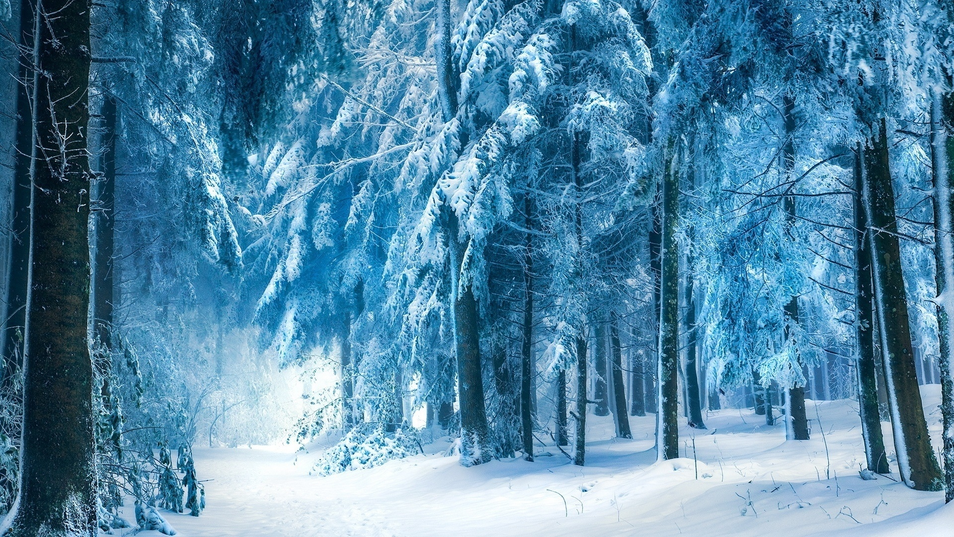 Snow Forest wallpaper photo hd