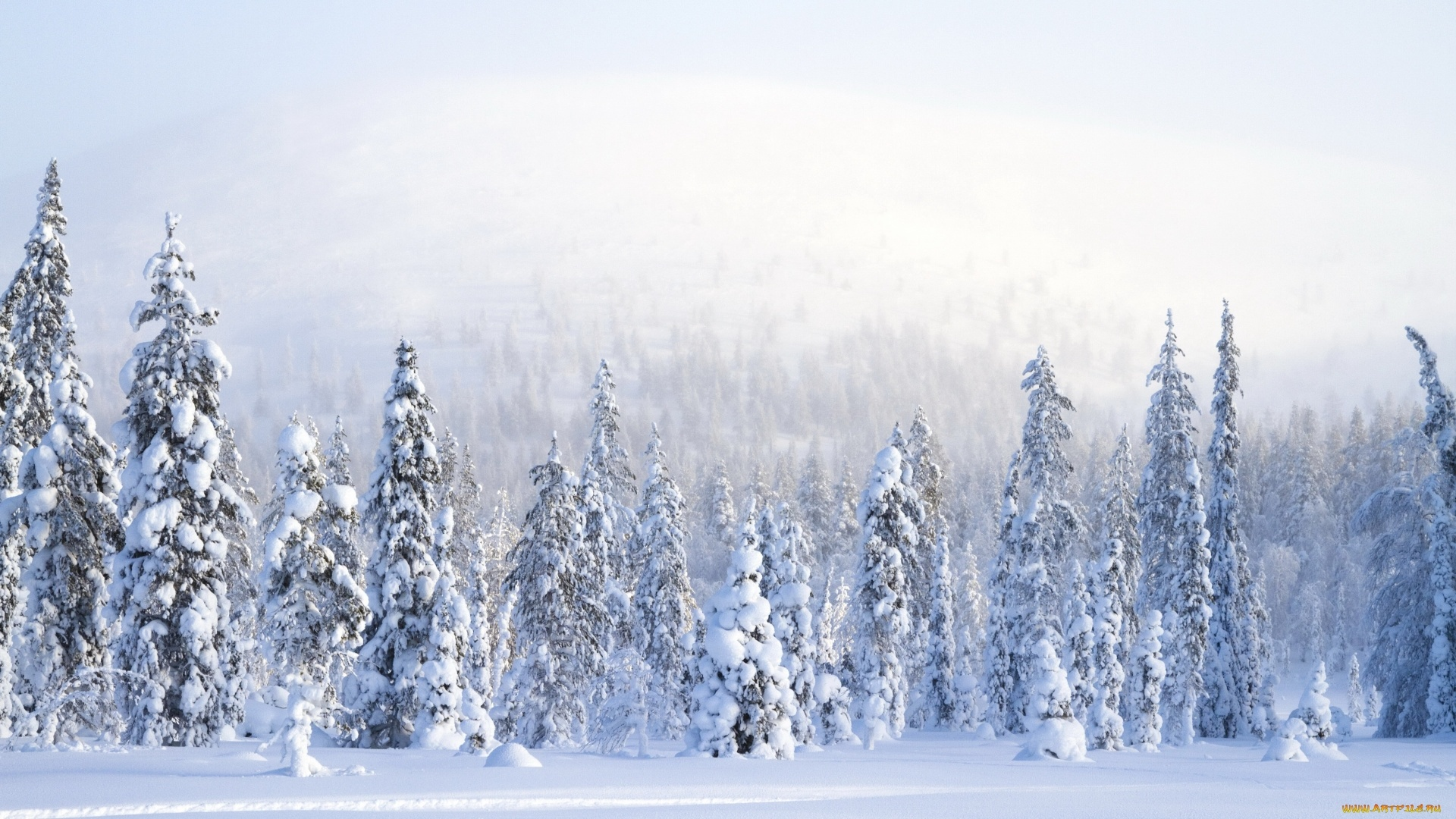 Snow Forest wallpaper for desktop