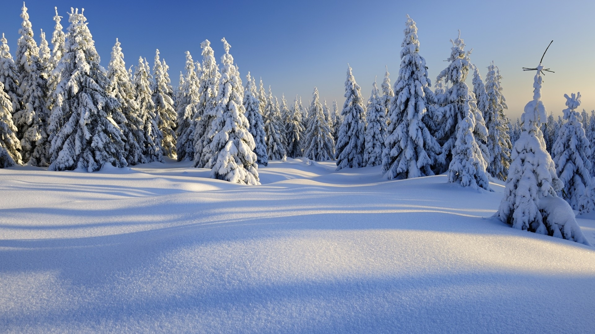 Snow Forest desktop wallpaper hd