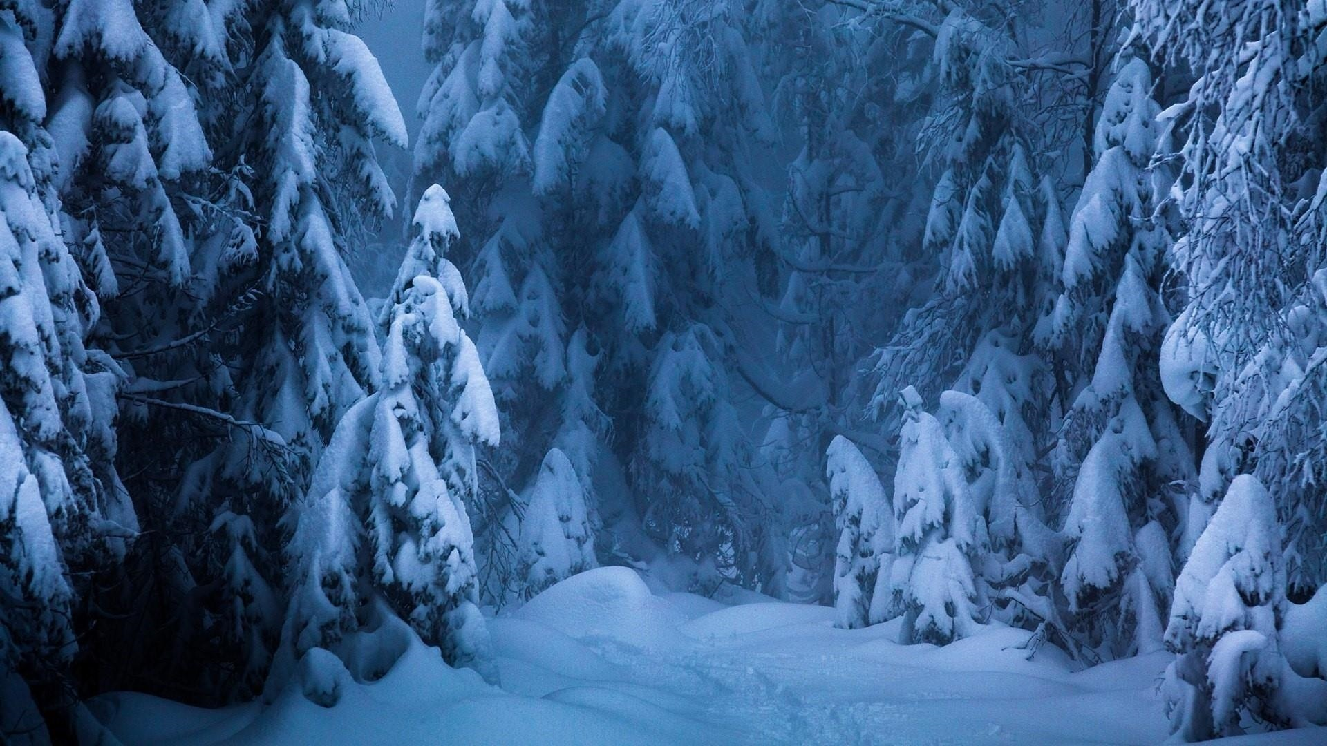 Snow Forest Picture