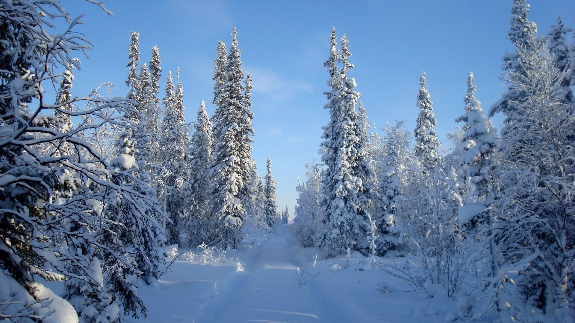 Snow Forest Image
