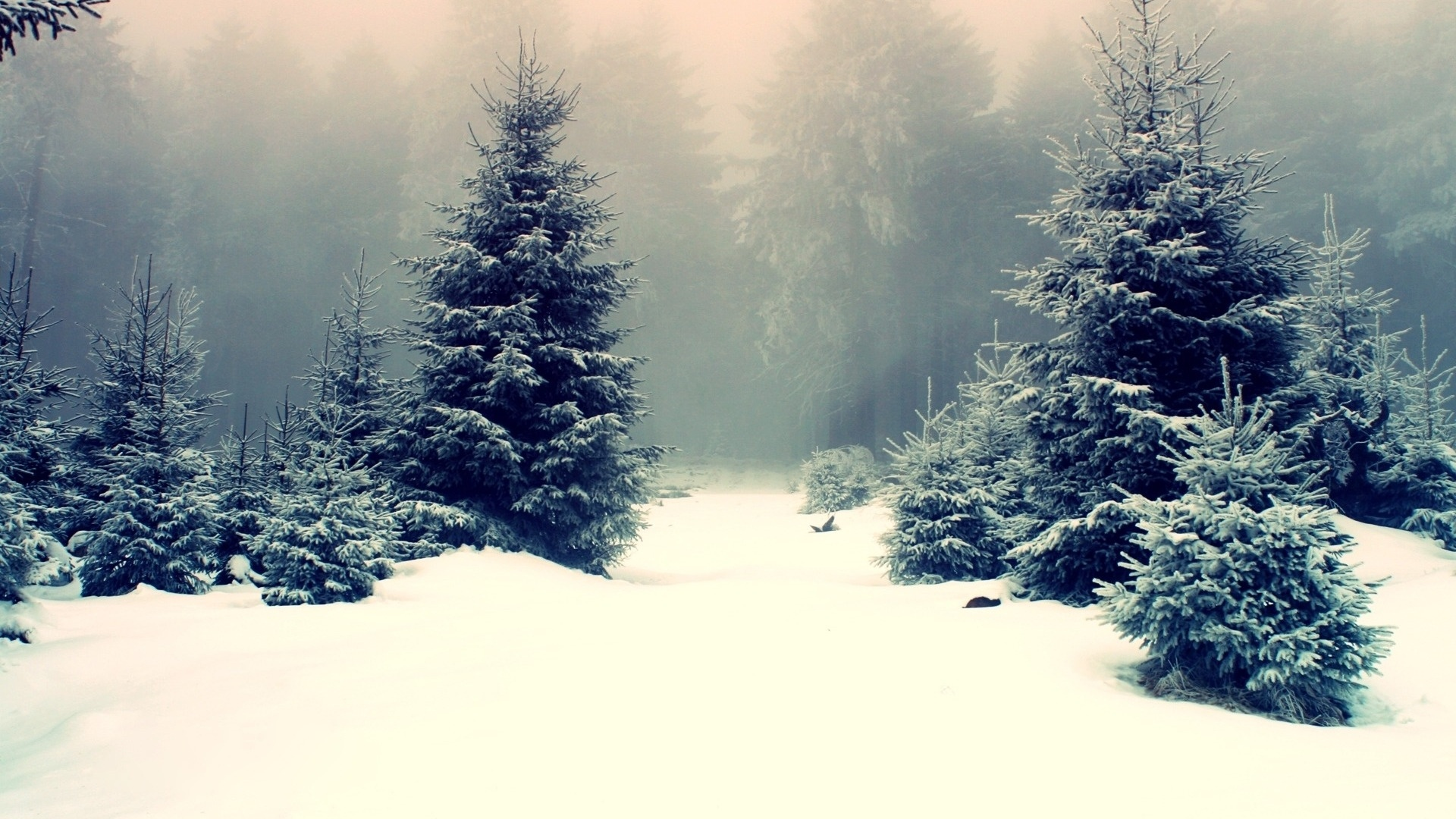 Snow Forest computer wallpaper