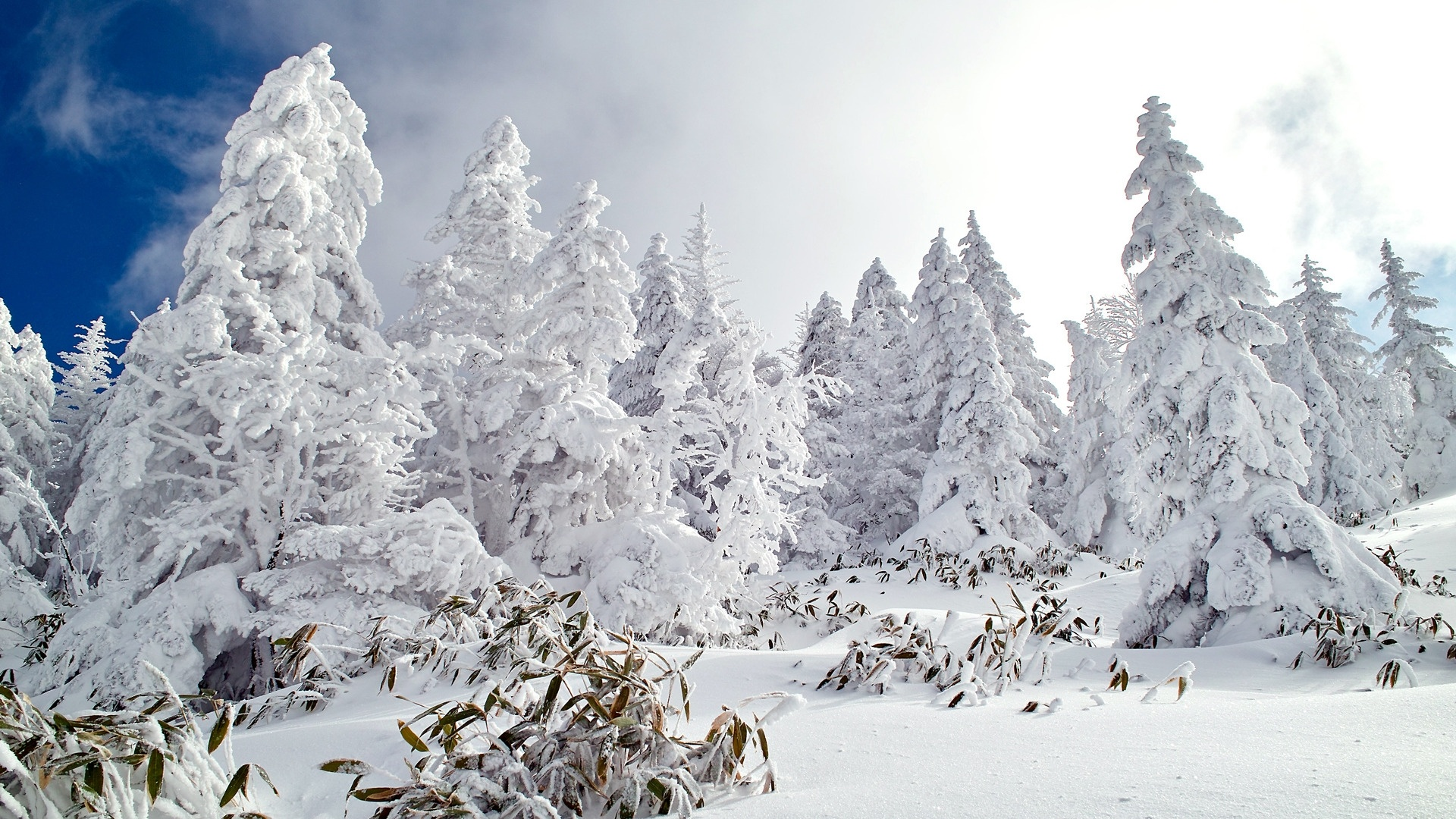 Snow Forest Background
