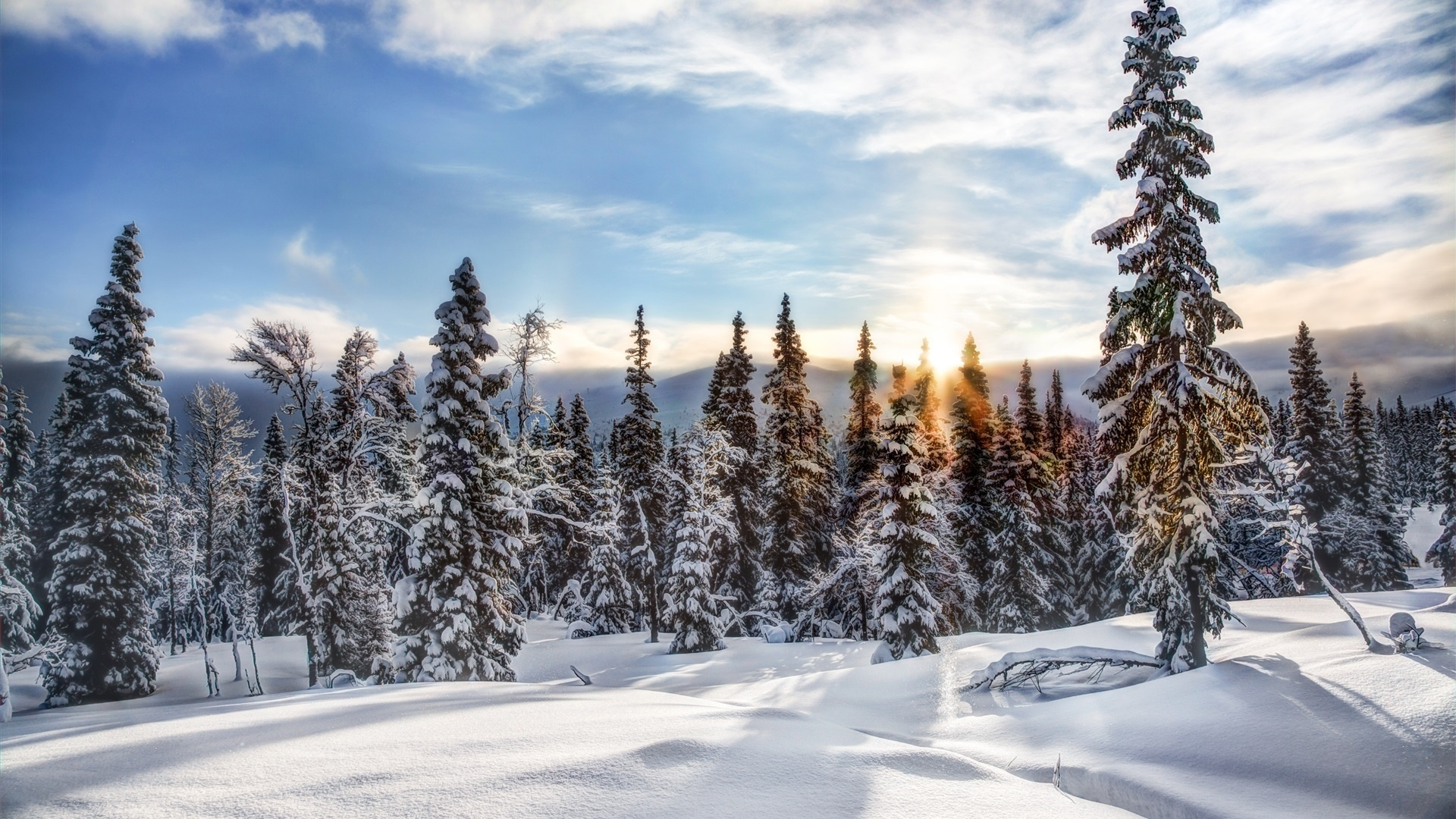 Snow Forest Pic