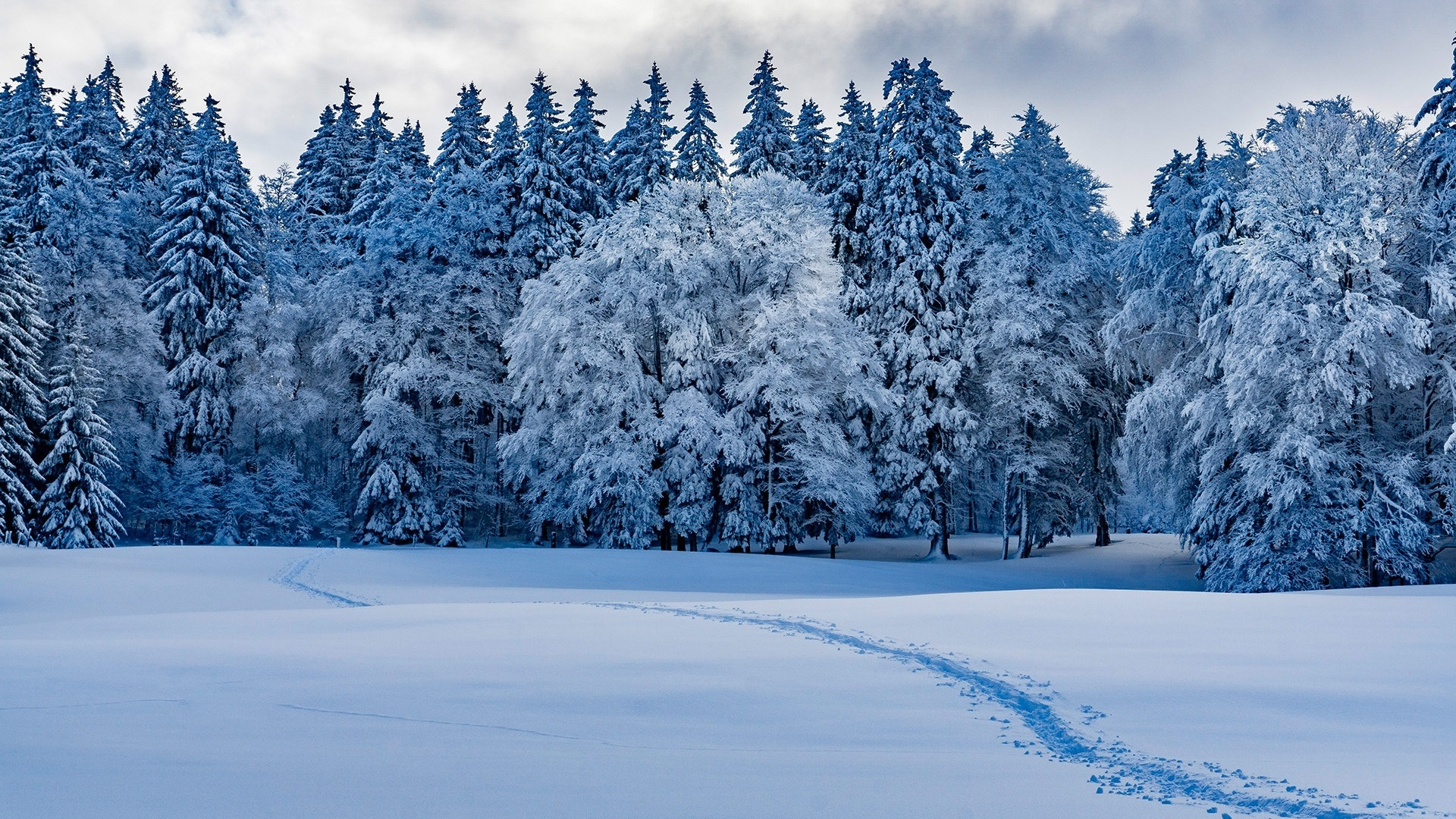 Snow Forest Wallpaper theme