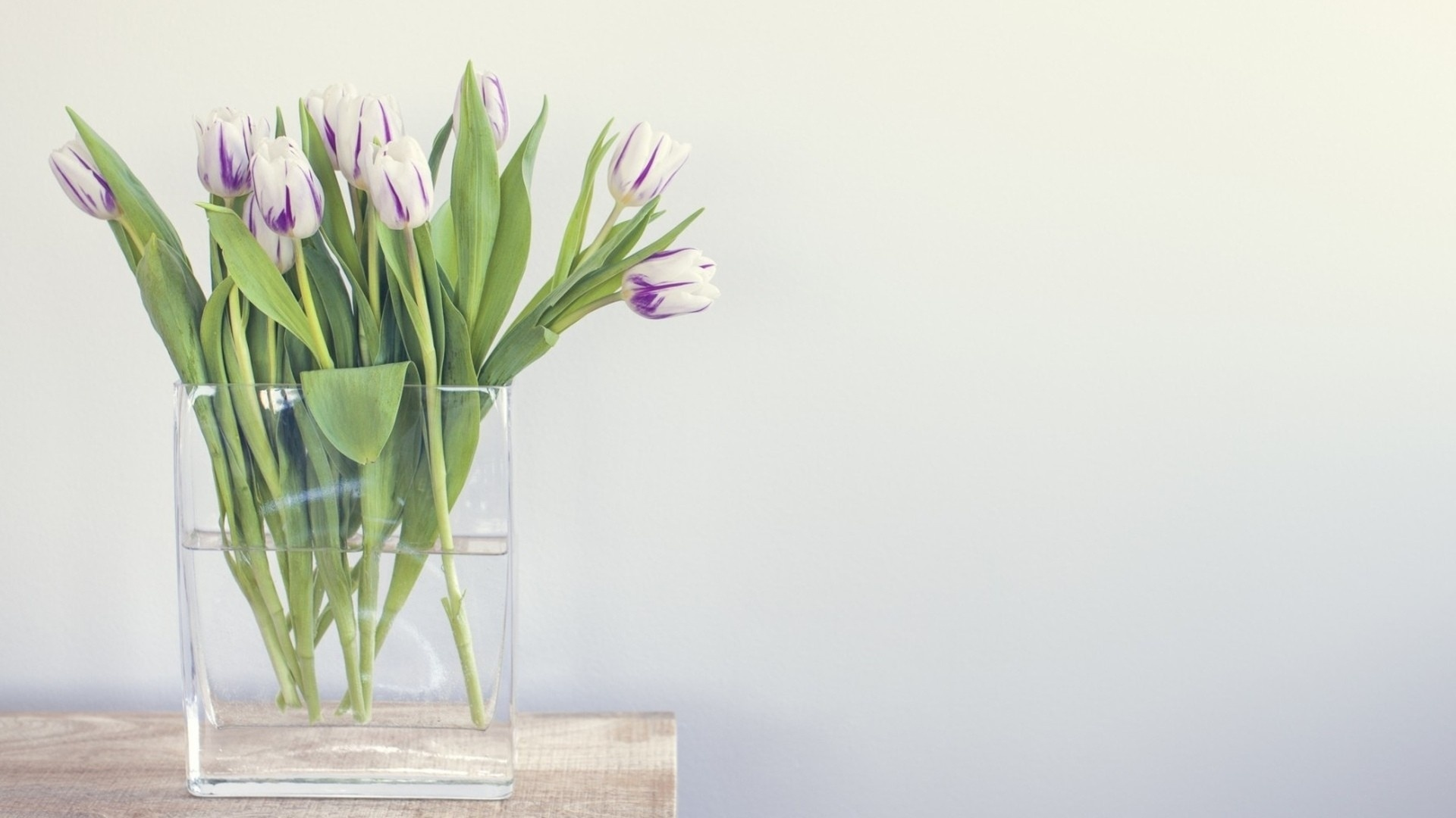 Tulip Minimalist Picture