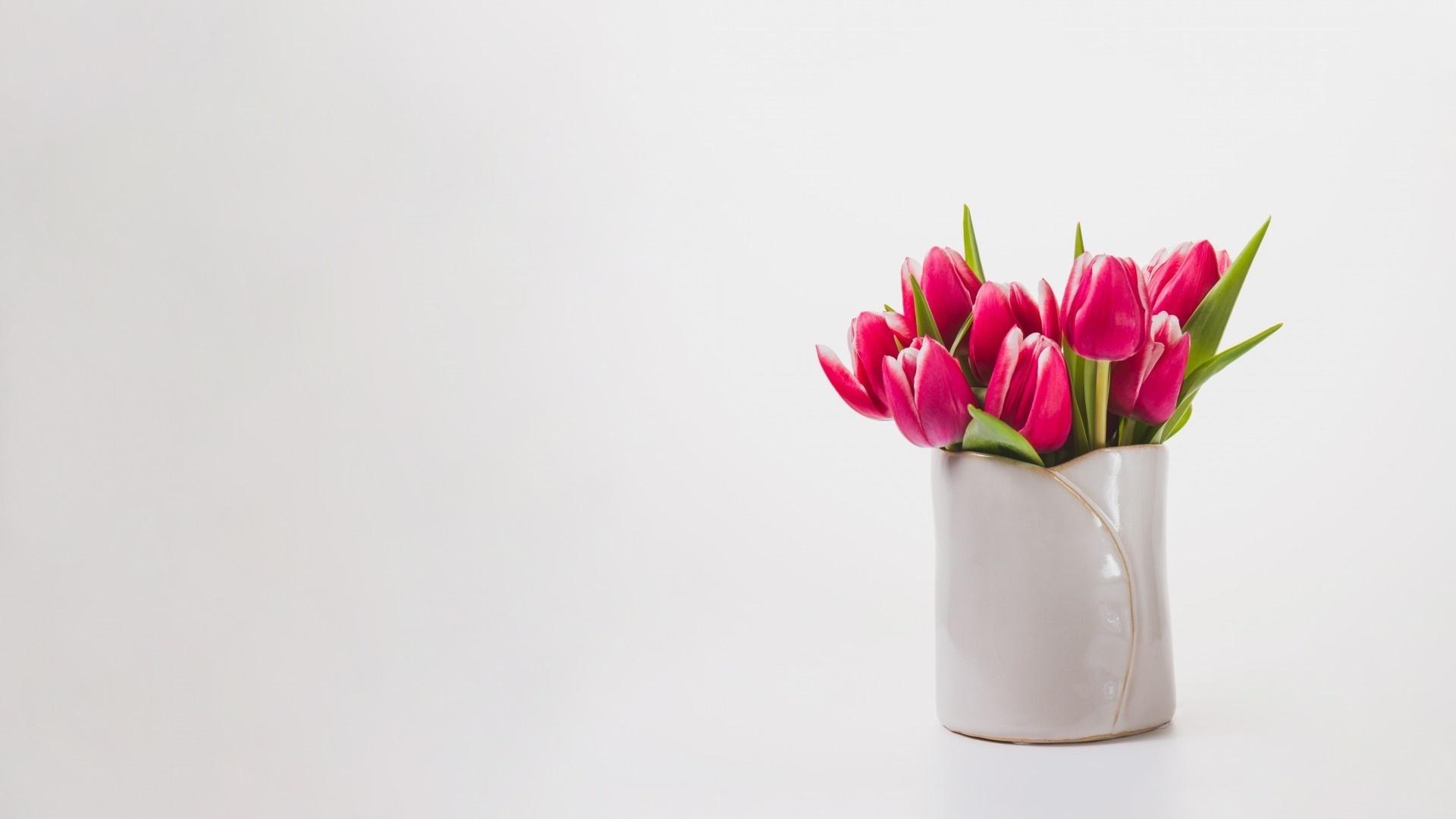 Tulip Minimalist Pic