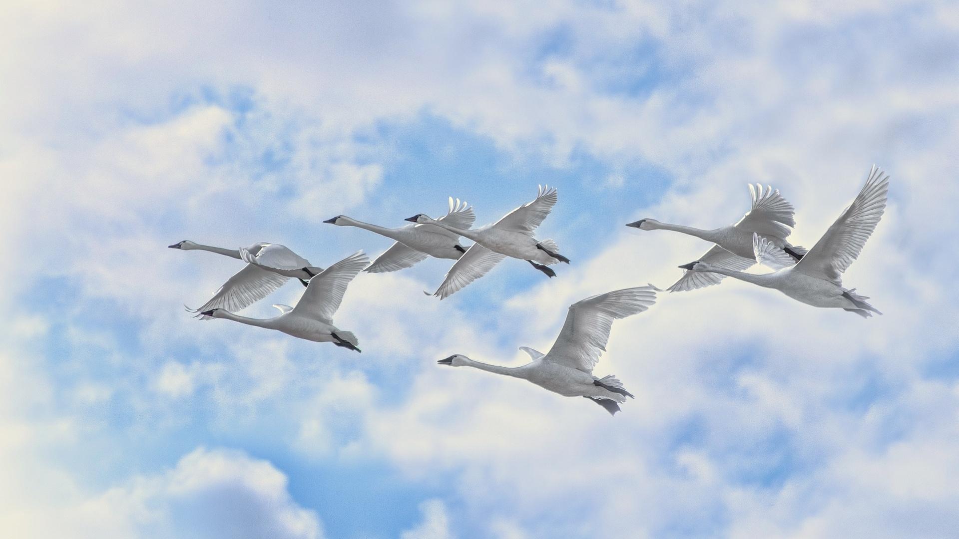 Wedge Birds In The Sky Desktop Wallpaper
