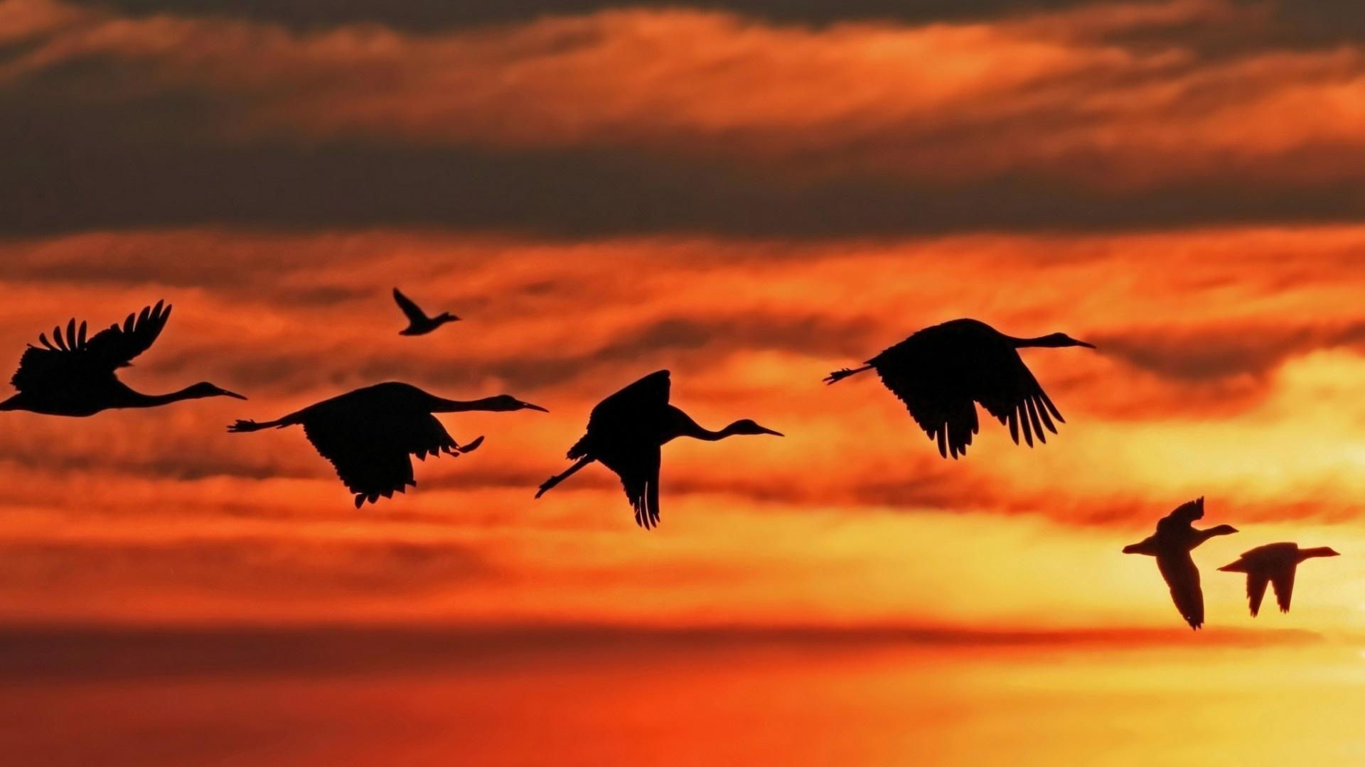 Wedge Birds In The Sky Image