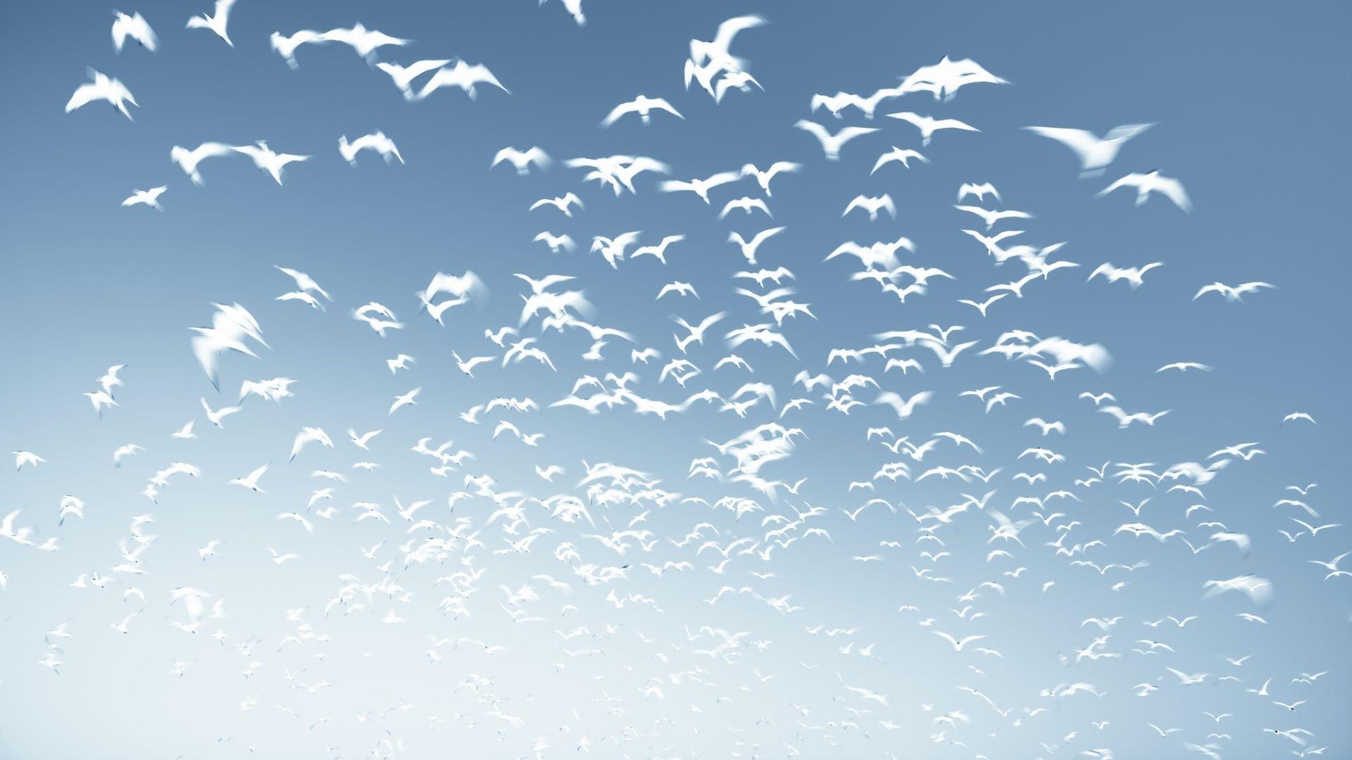 Wedge Birds In The Sky wallpaper for desktop