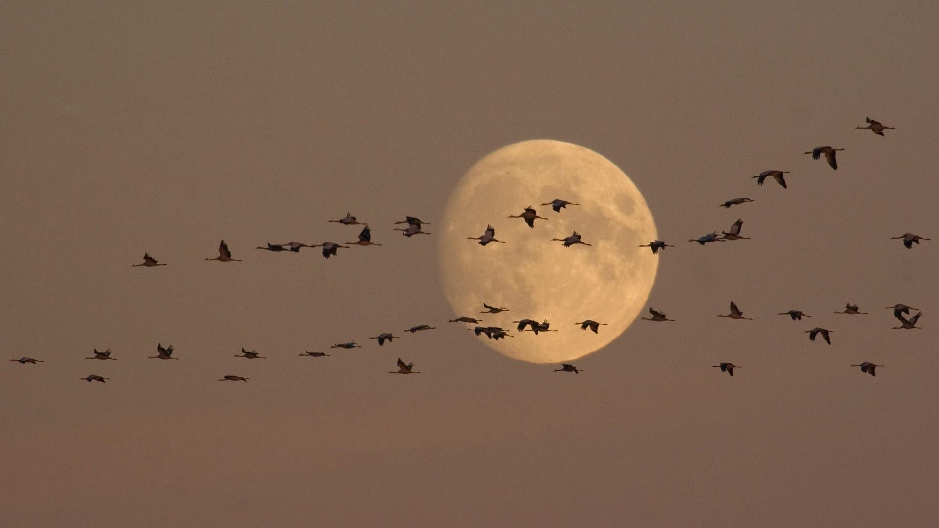 Wedge Birds In The Sky Wallpaper